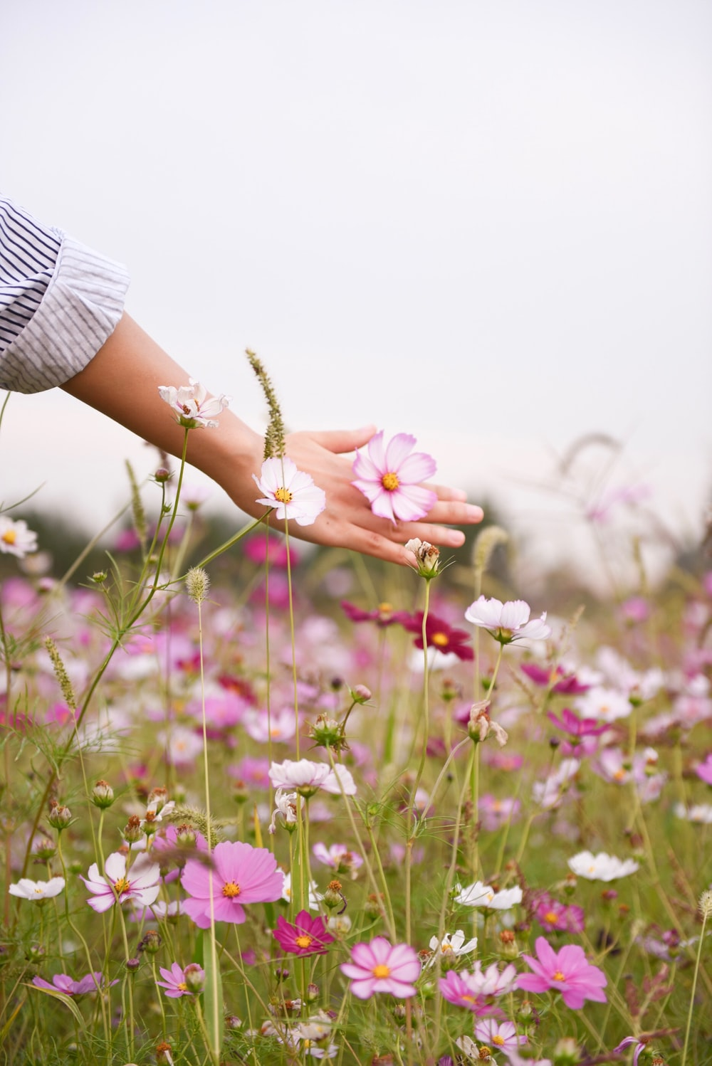 woman holding pink petaled flower