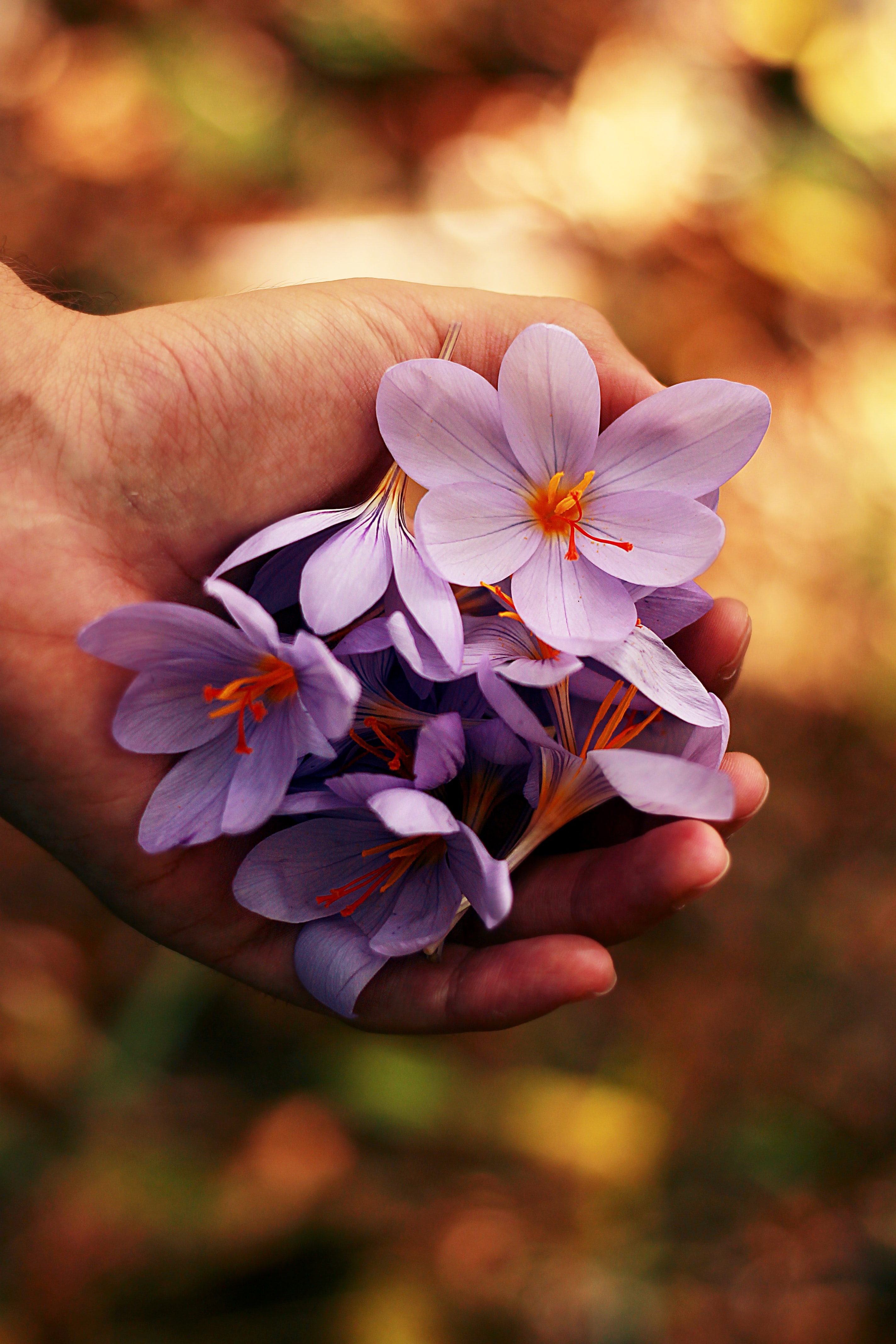 A person's hand holding a bunch of violet flowers
