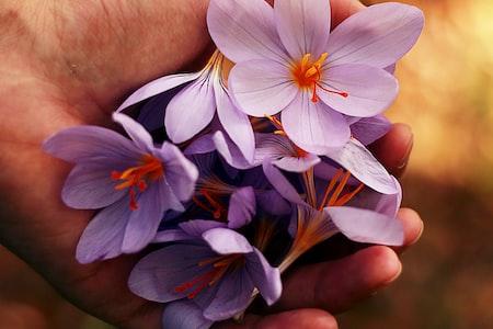 Create a Memorial Flower Garden