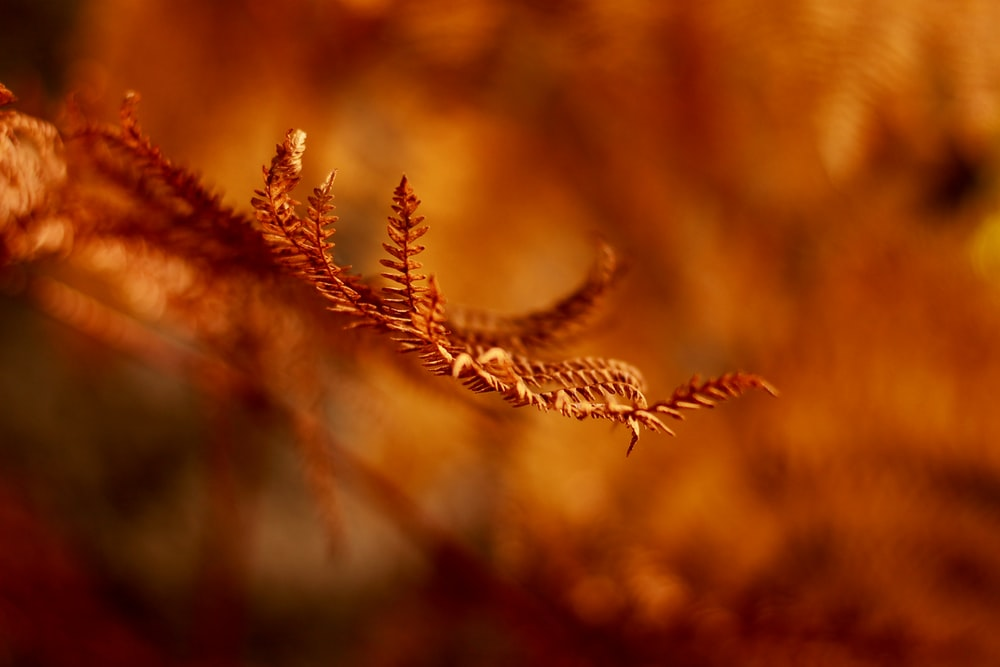 shallow focus photography of brown plant