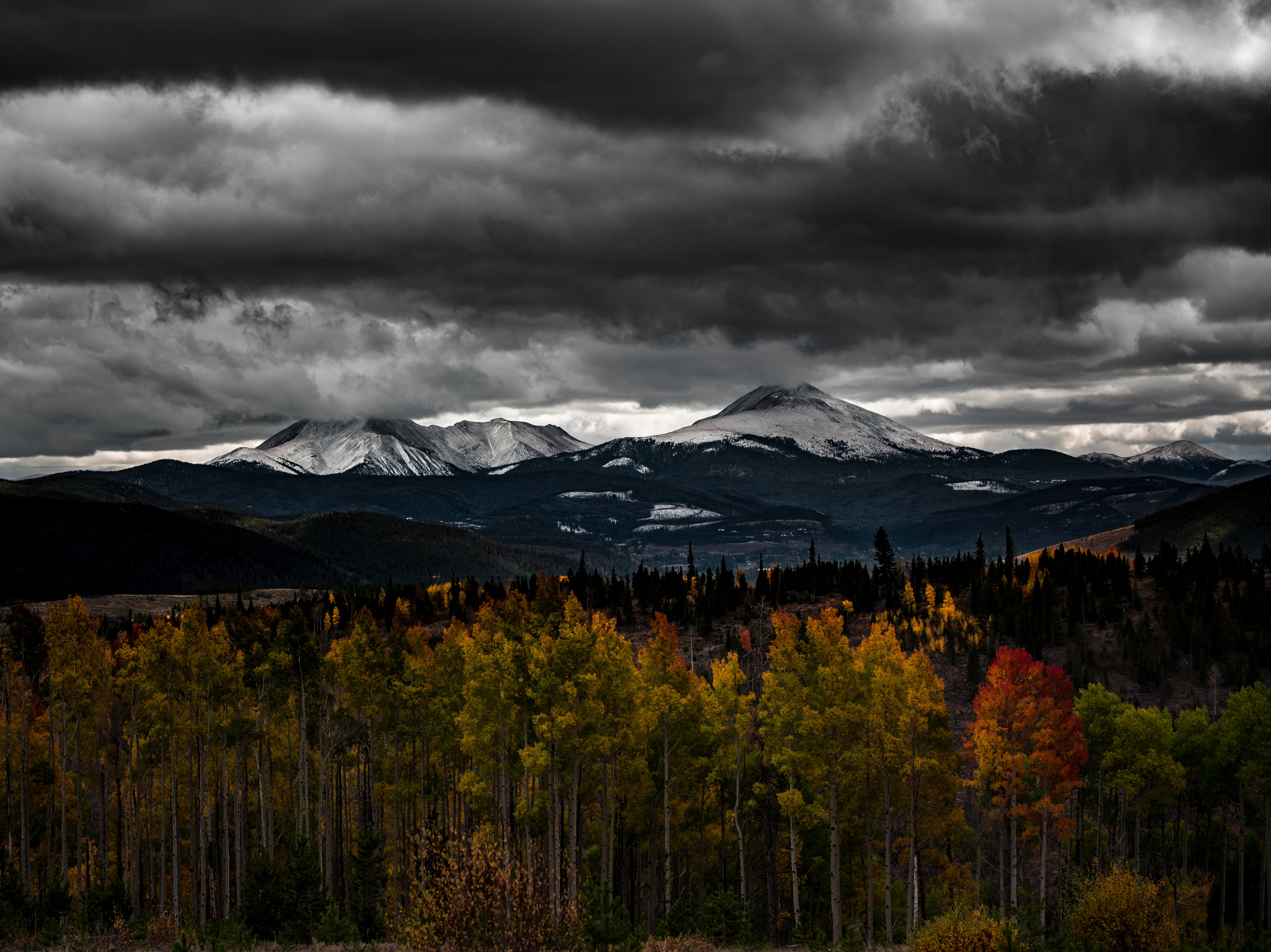 Tall autumn-colored trees and snow-capped mountains on the horizon in Silverthorne