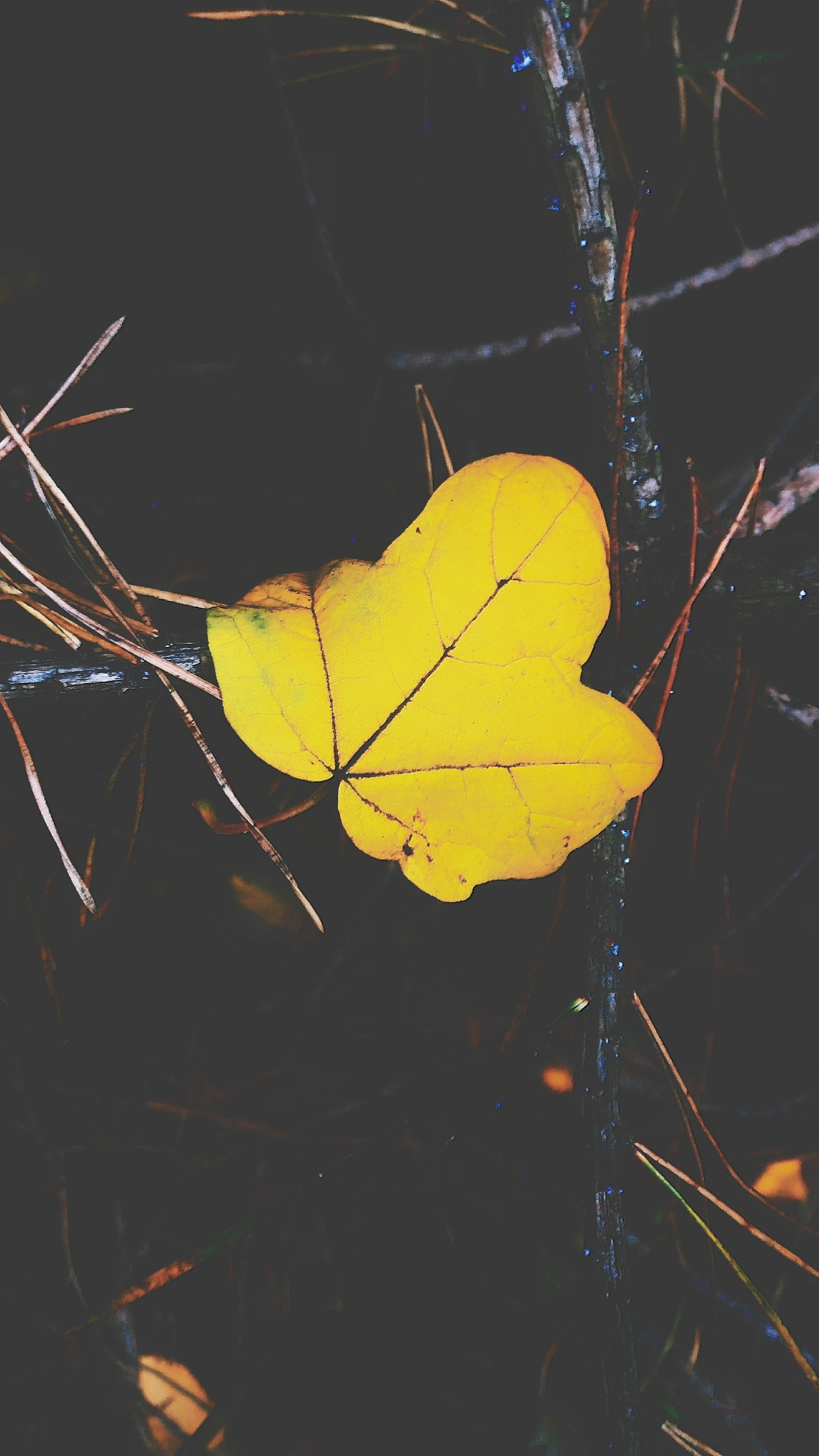 A yellow leaf.