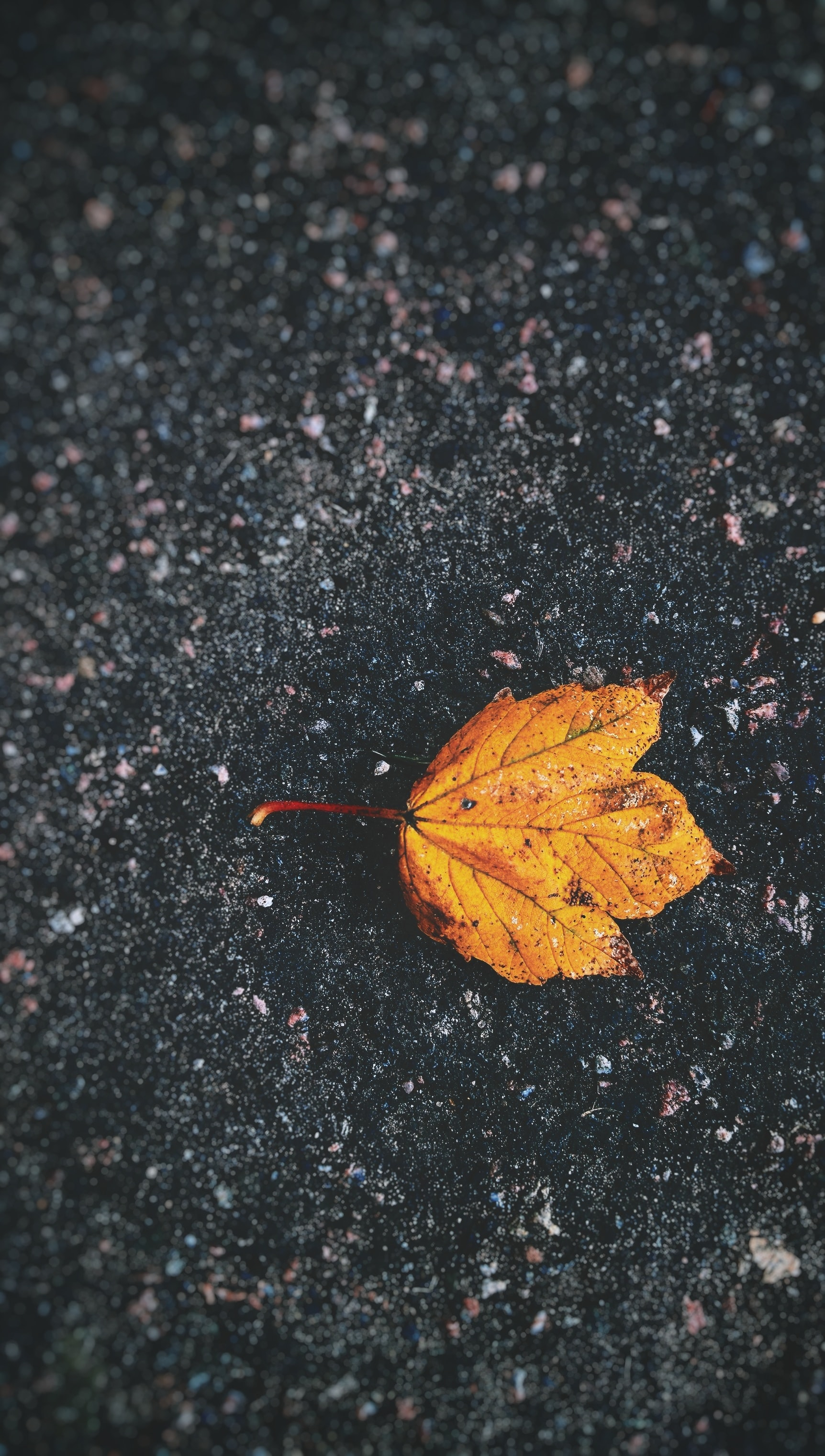 A yellow leaf on the ground.
