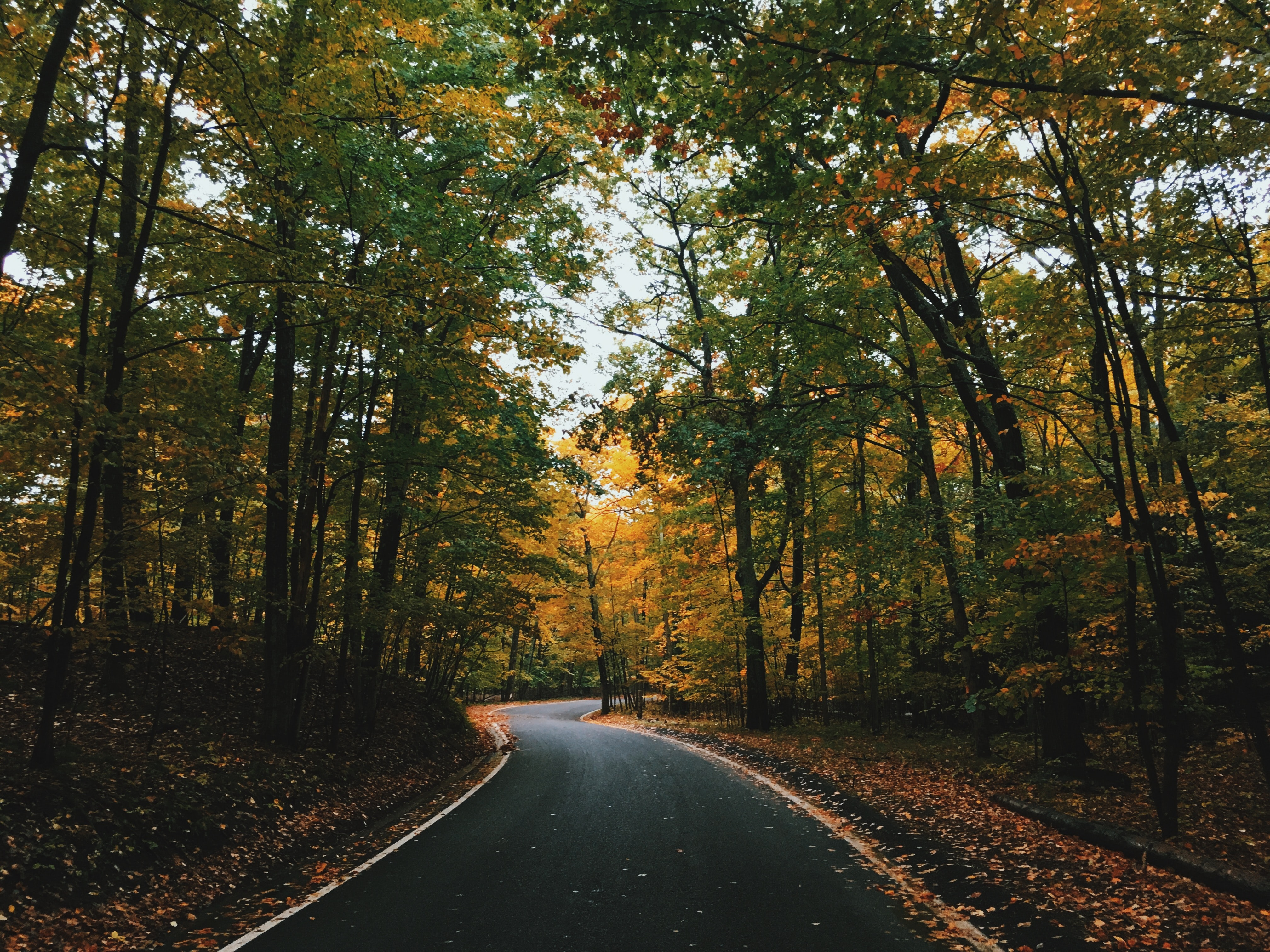 A forest road surrounded with green and yellow trees during fall in Harbor Springs, Michigan, United States