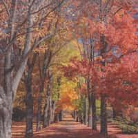 I miss the fall rake stories