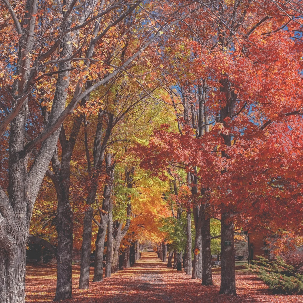 concrete pathway near red and yellow leaf tree