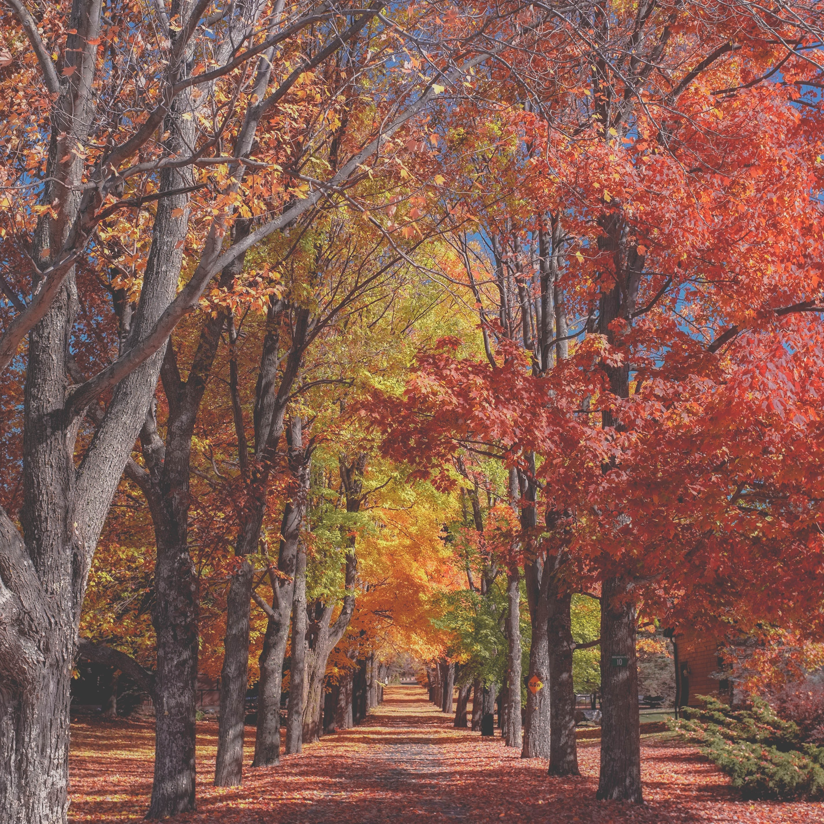 Colorful trees on either sides of a leaf-covered park alley in the autumn