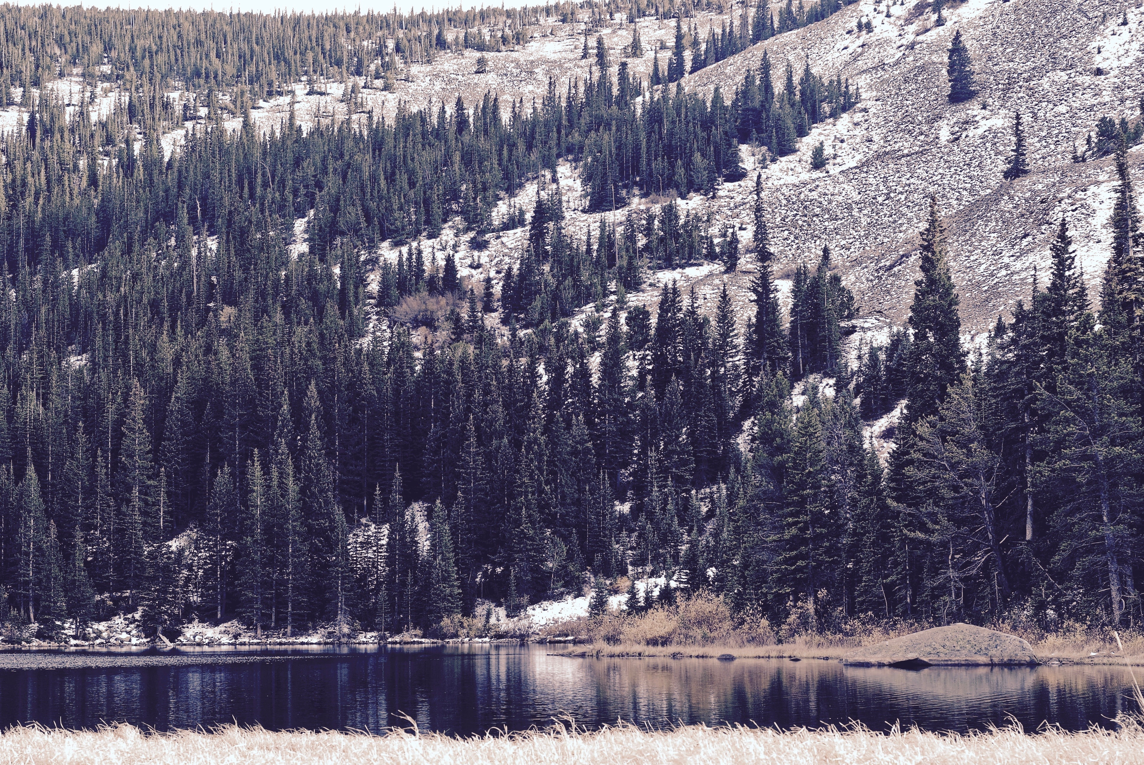 Coniferous trees on a slope near a quiet lake in Eldora
