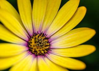 close photography of yellow and purple petaled flower