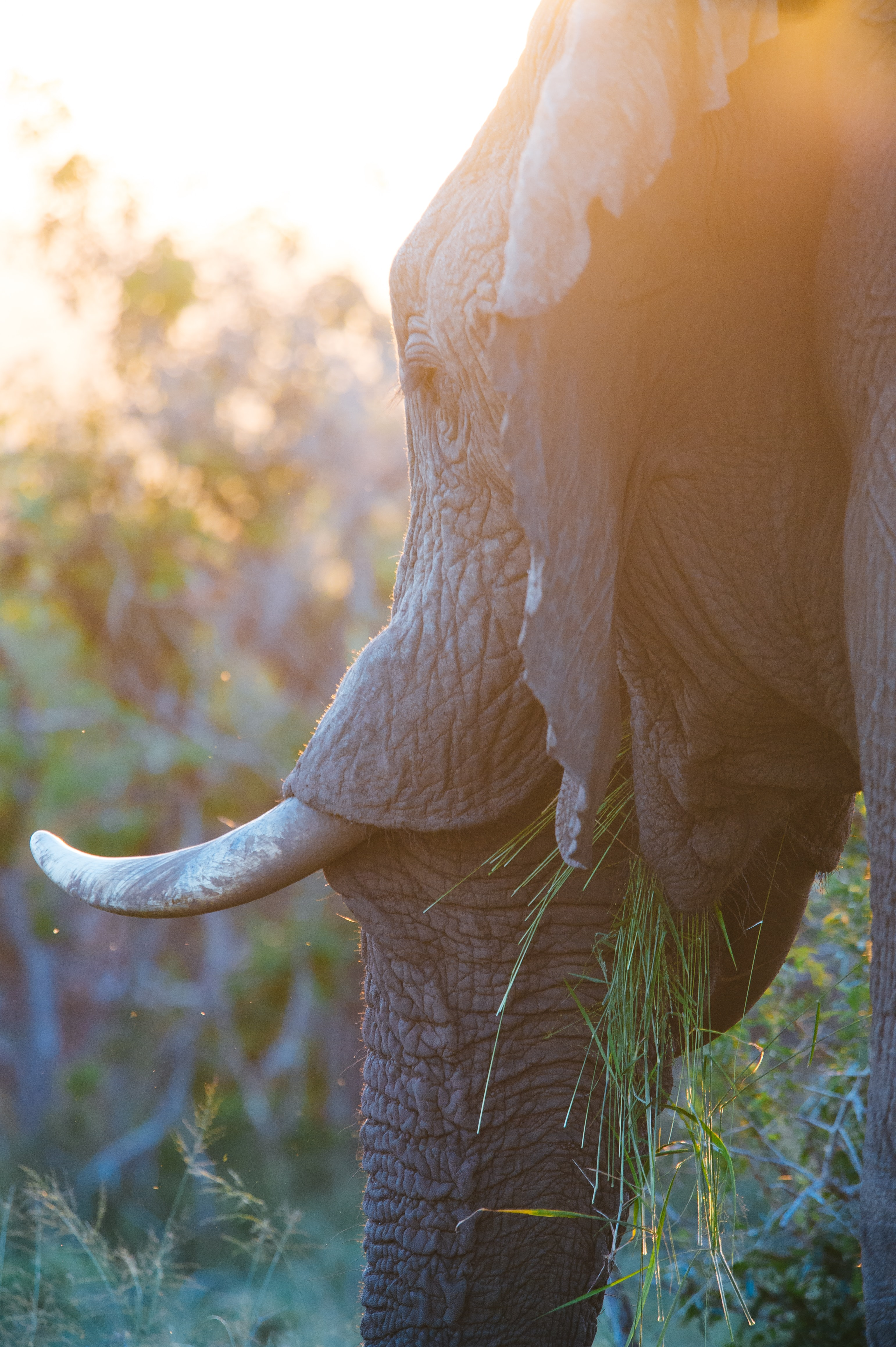 selective focus photography of elephant