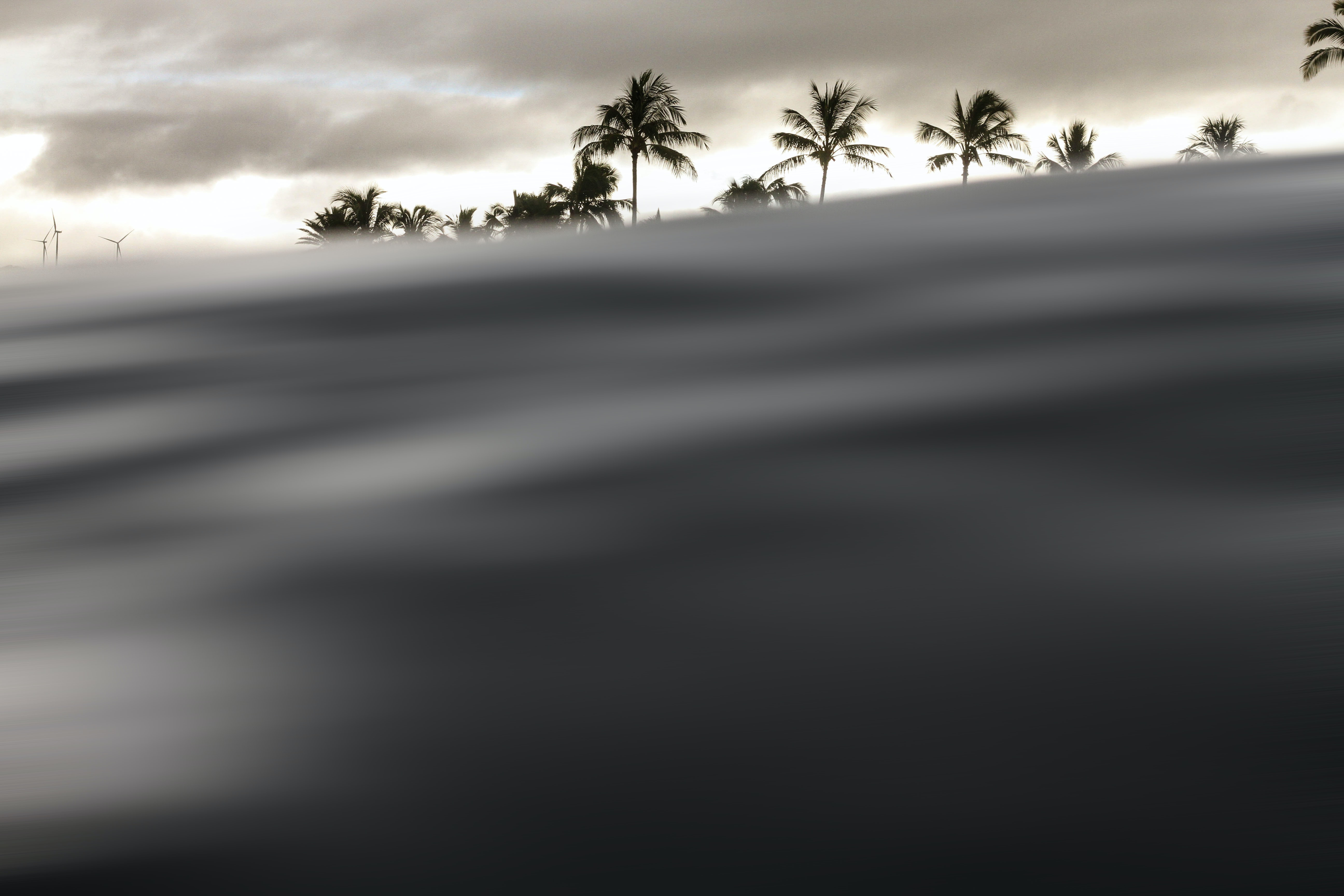silhoutte of palm tree under cloudy sky