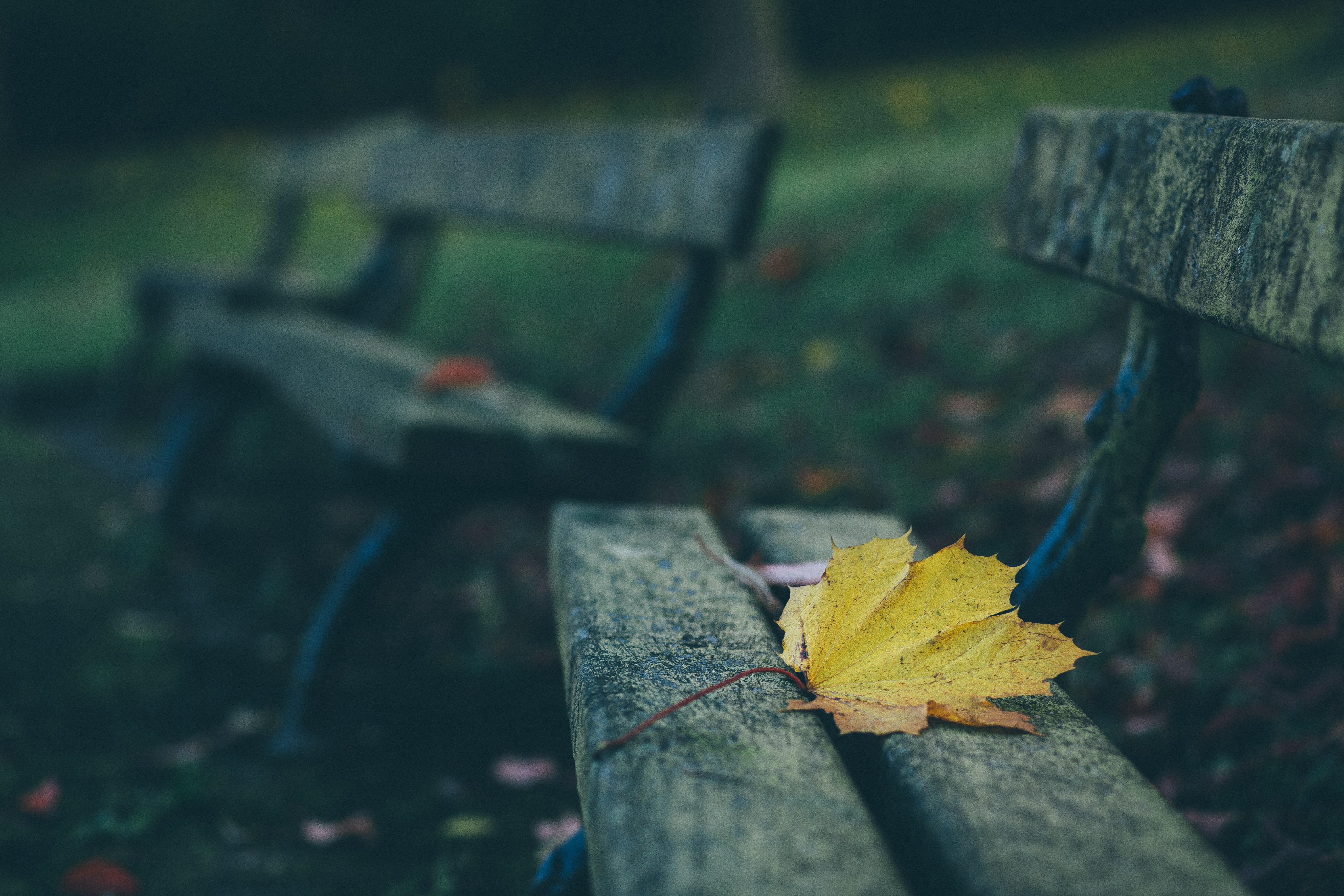 brown maple leaf on brown wooden bench