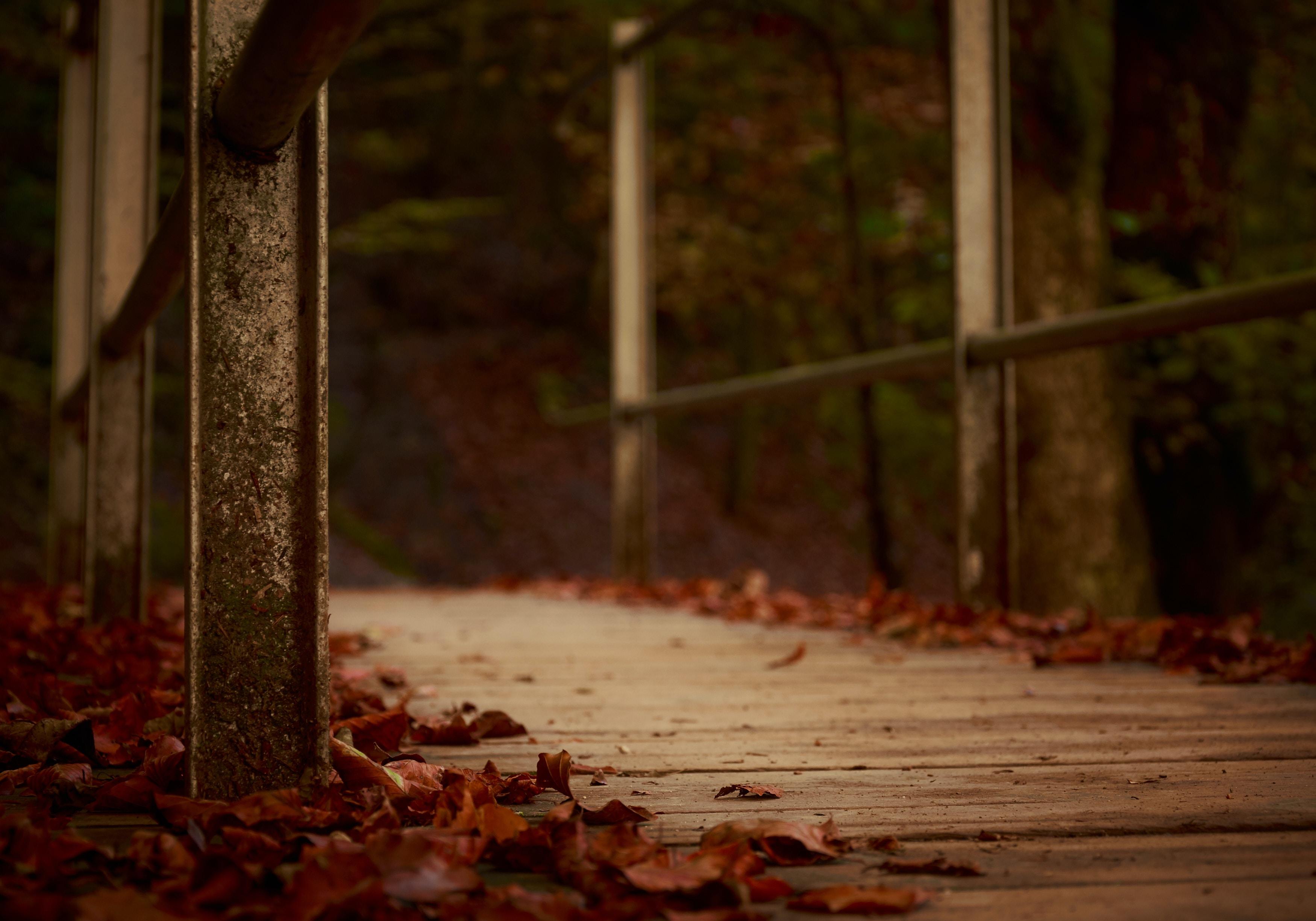 A close up shot of the leaf covered walking path and bridge at Gorges de la Jogne