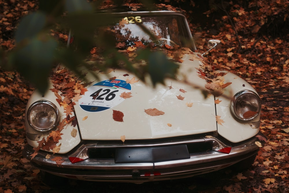 white vehicle covered in brown leaf lot
