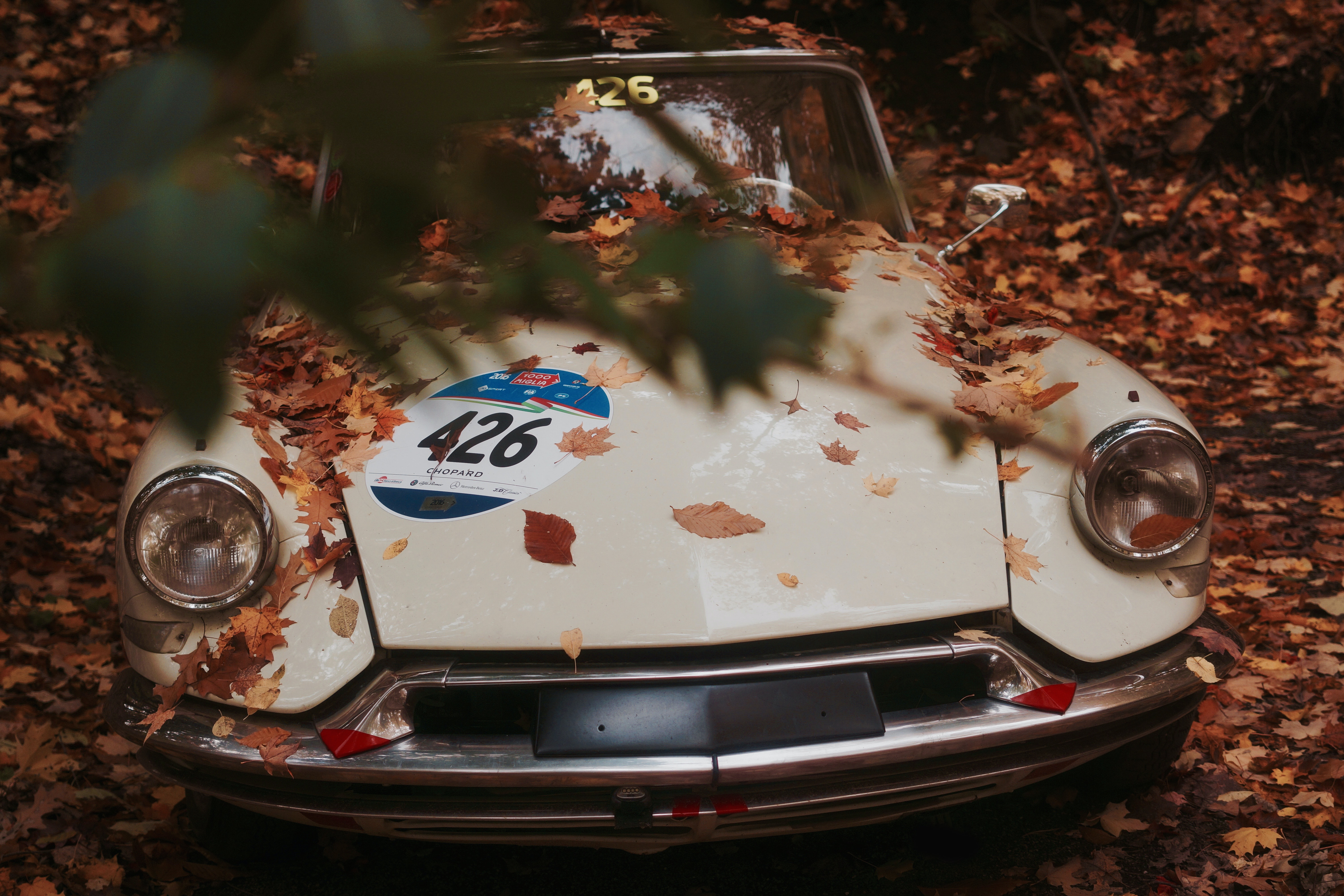 Front view of a vintage car, partially obstructed by a tree branch, covered in dried leaves.