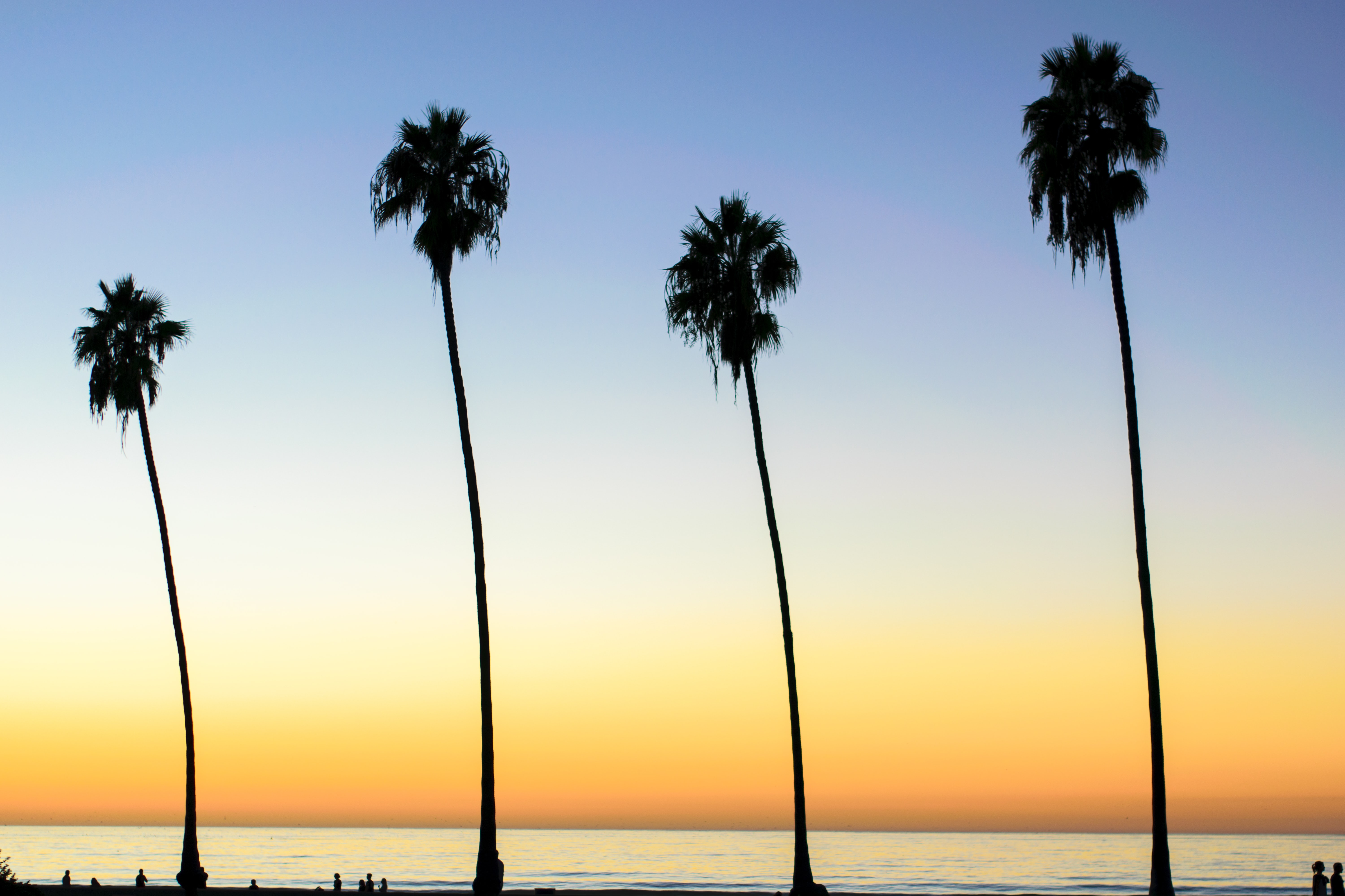 The silhouettes of four tall palm trees at sunset