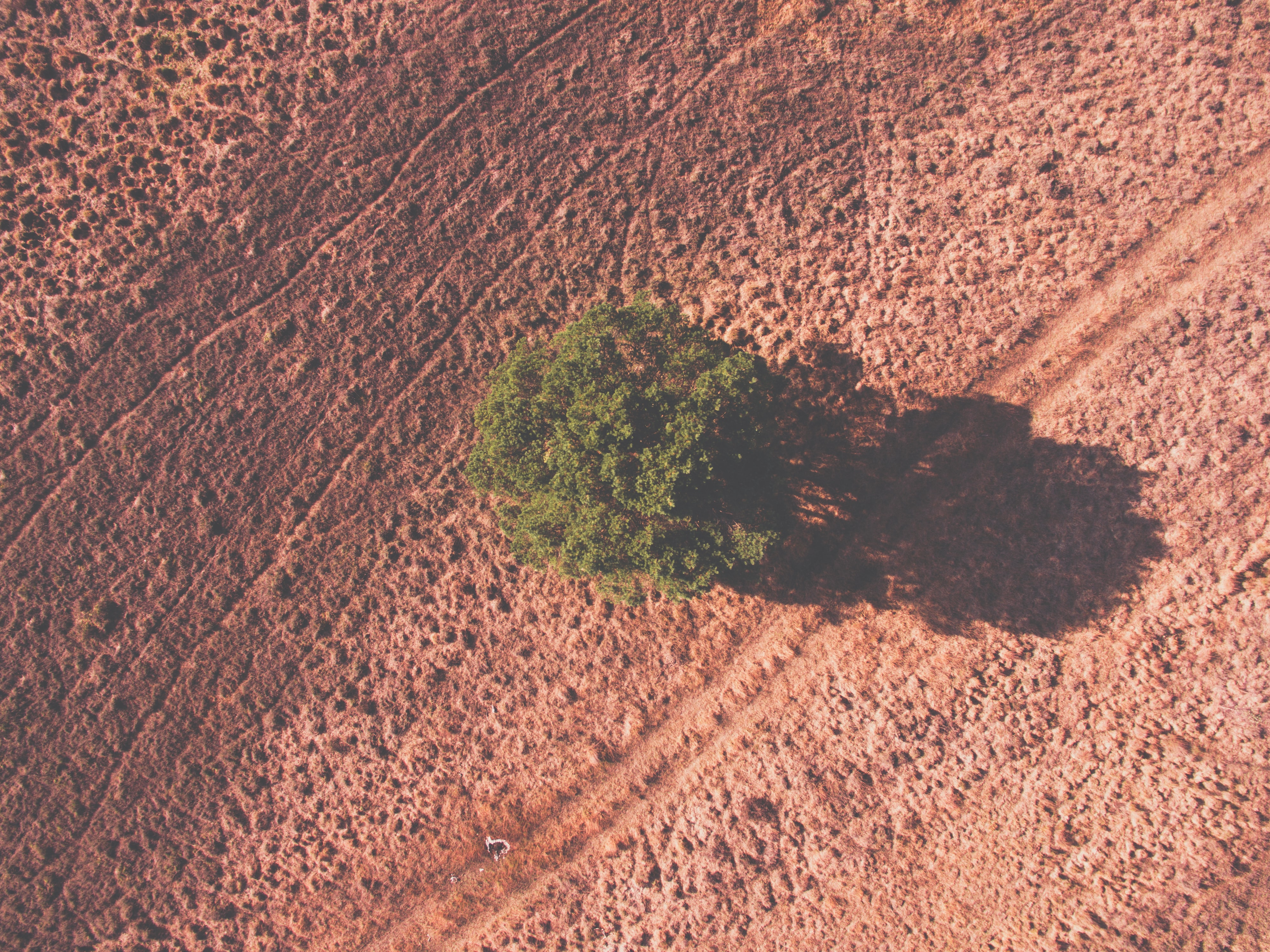 aerial view photography of green leafed tree