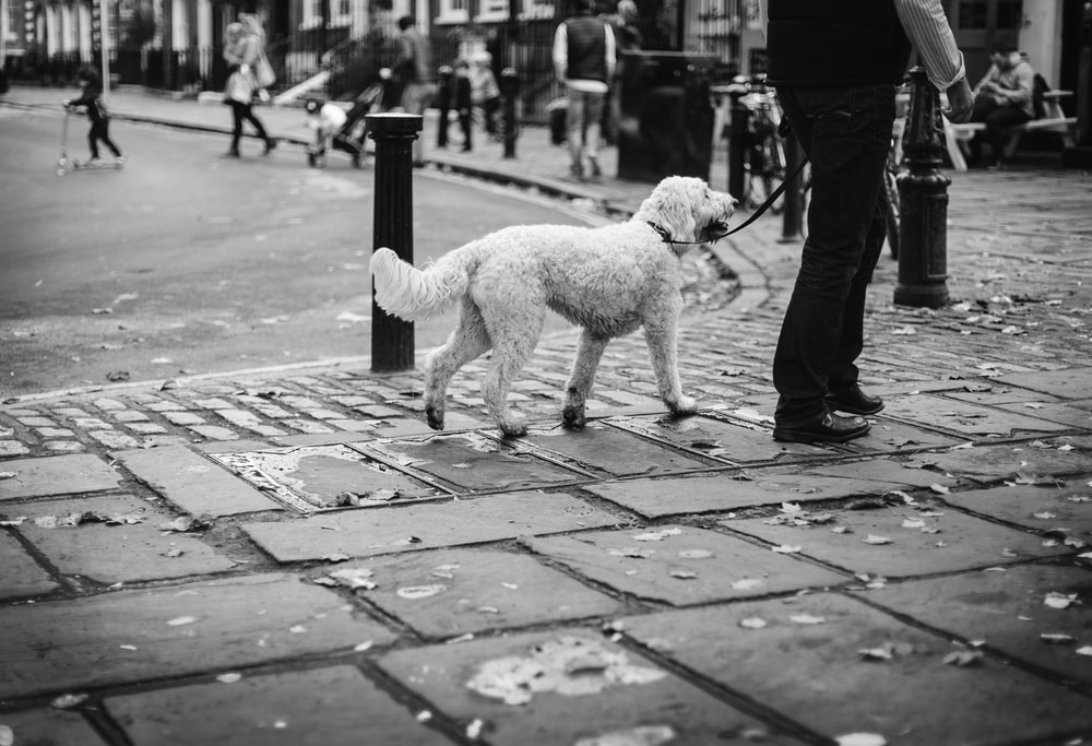grayscale photo of dog walking on sidewalk