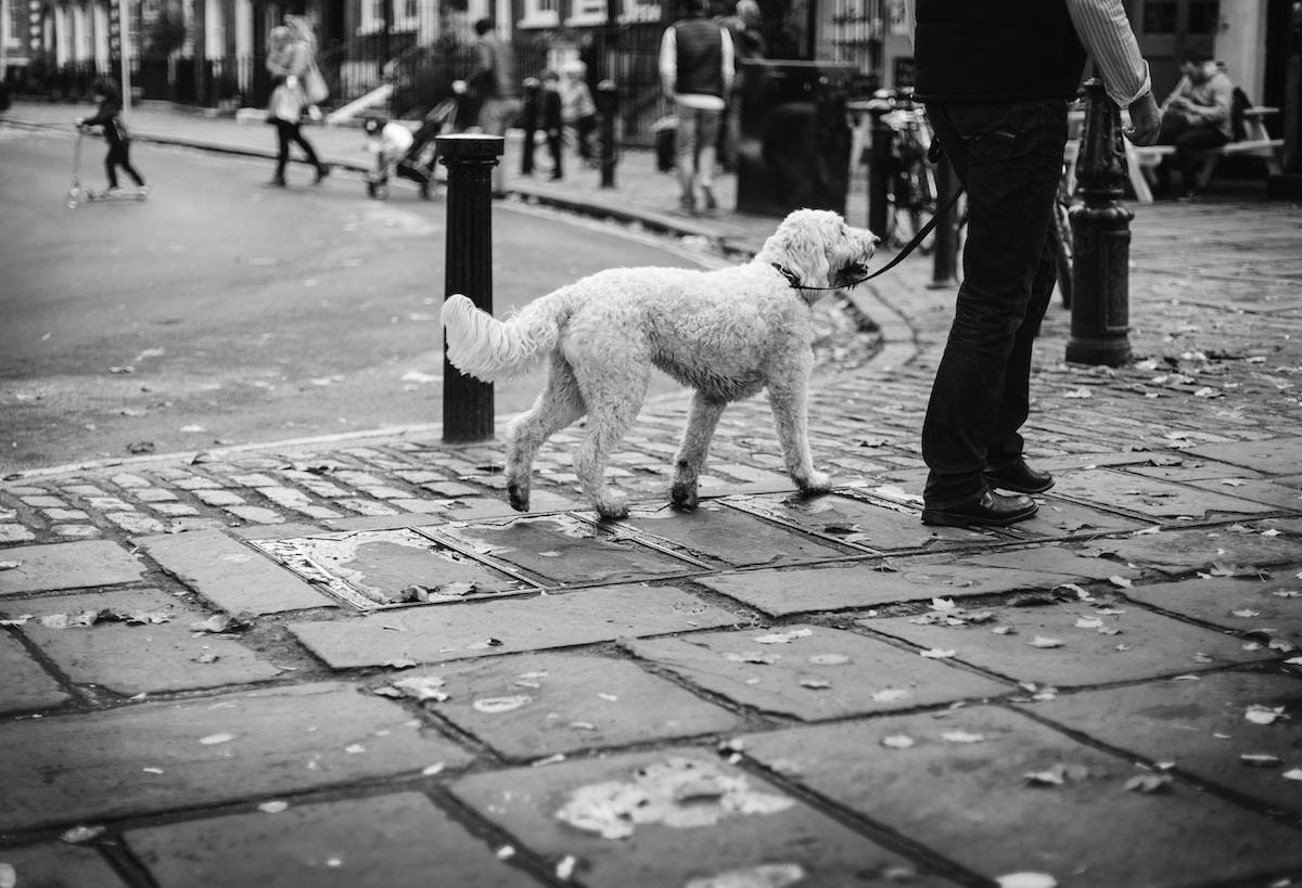 dog walker on demand app