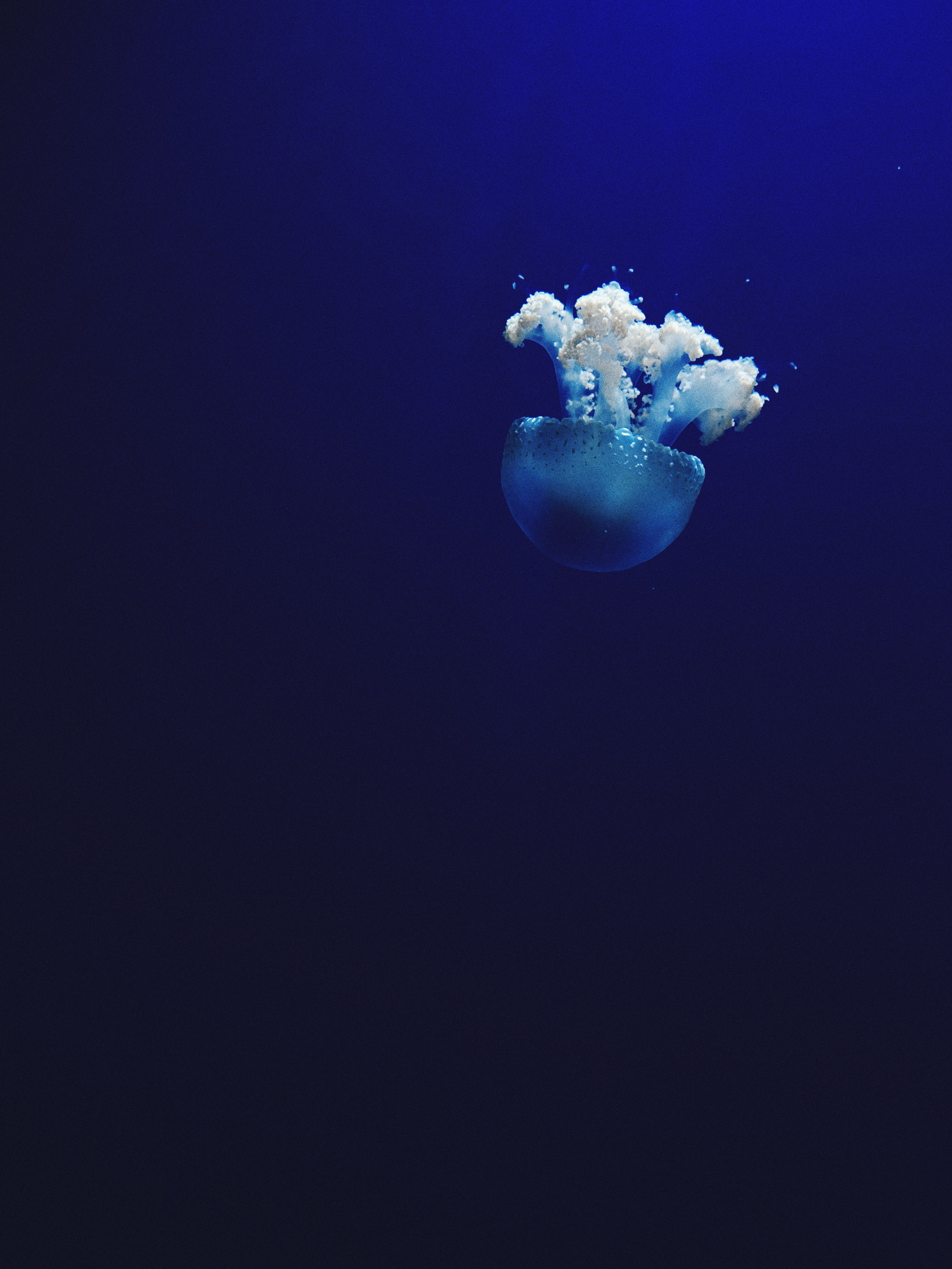 jellyfish under water photo