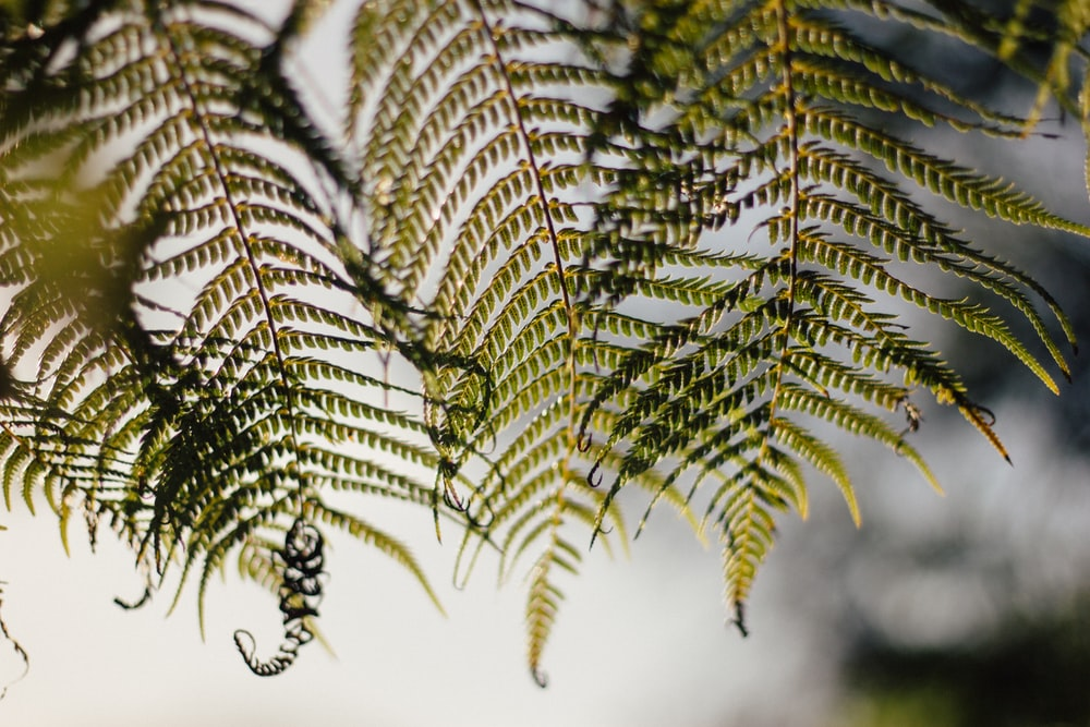 closeup photography of fern plant