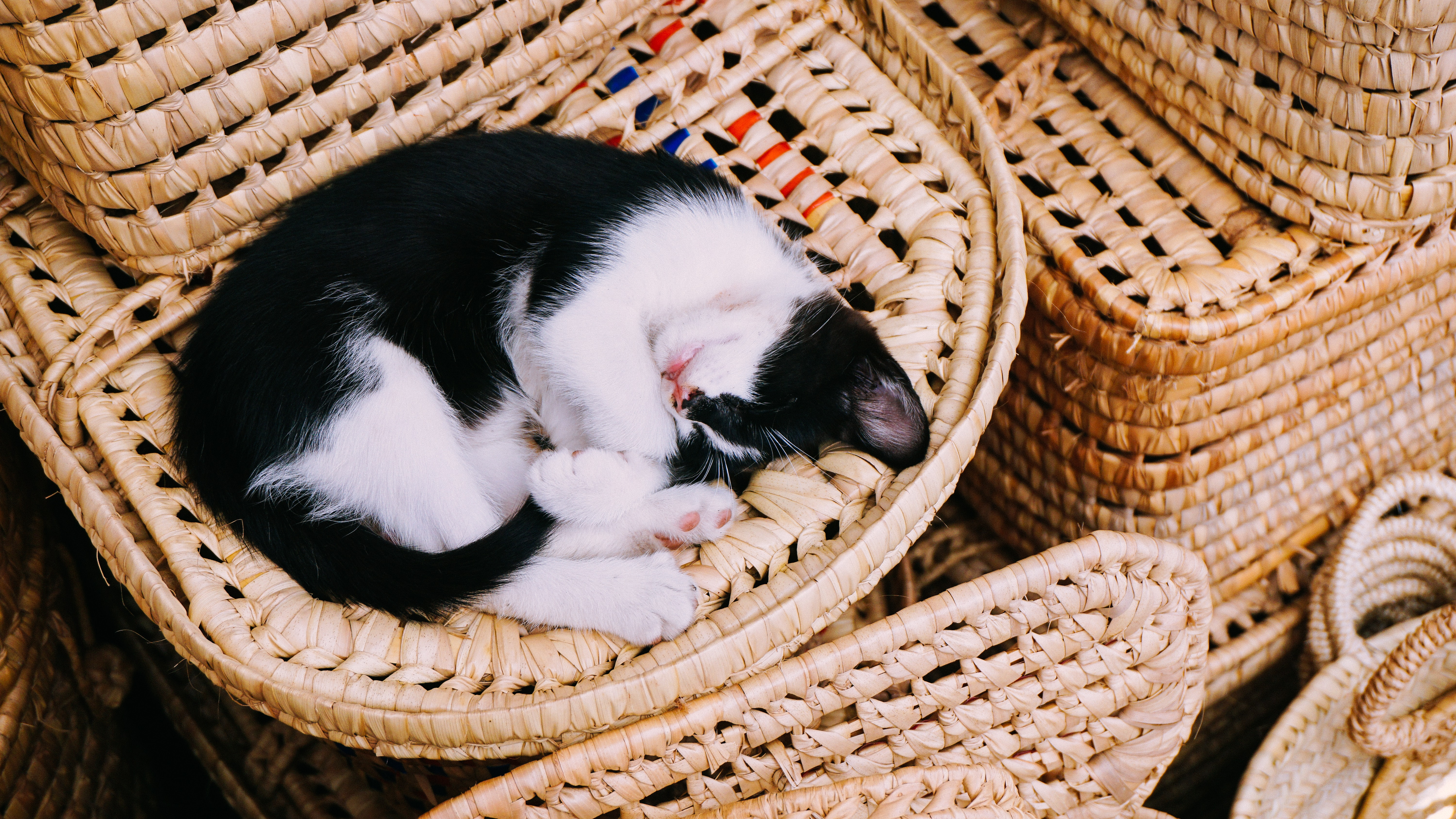 Black and white kitten curled up and sleeping in woven wicker basket