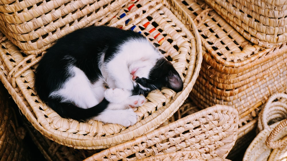 white and black cat sleeping on brown wicker basket