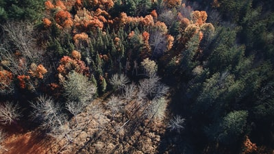 aerial photography of trees pine tree zoom background