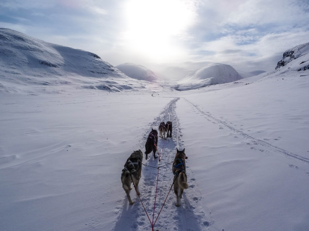 five wolves walking on snow covered mountain during daytime