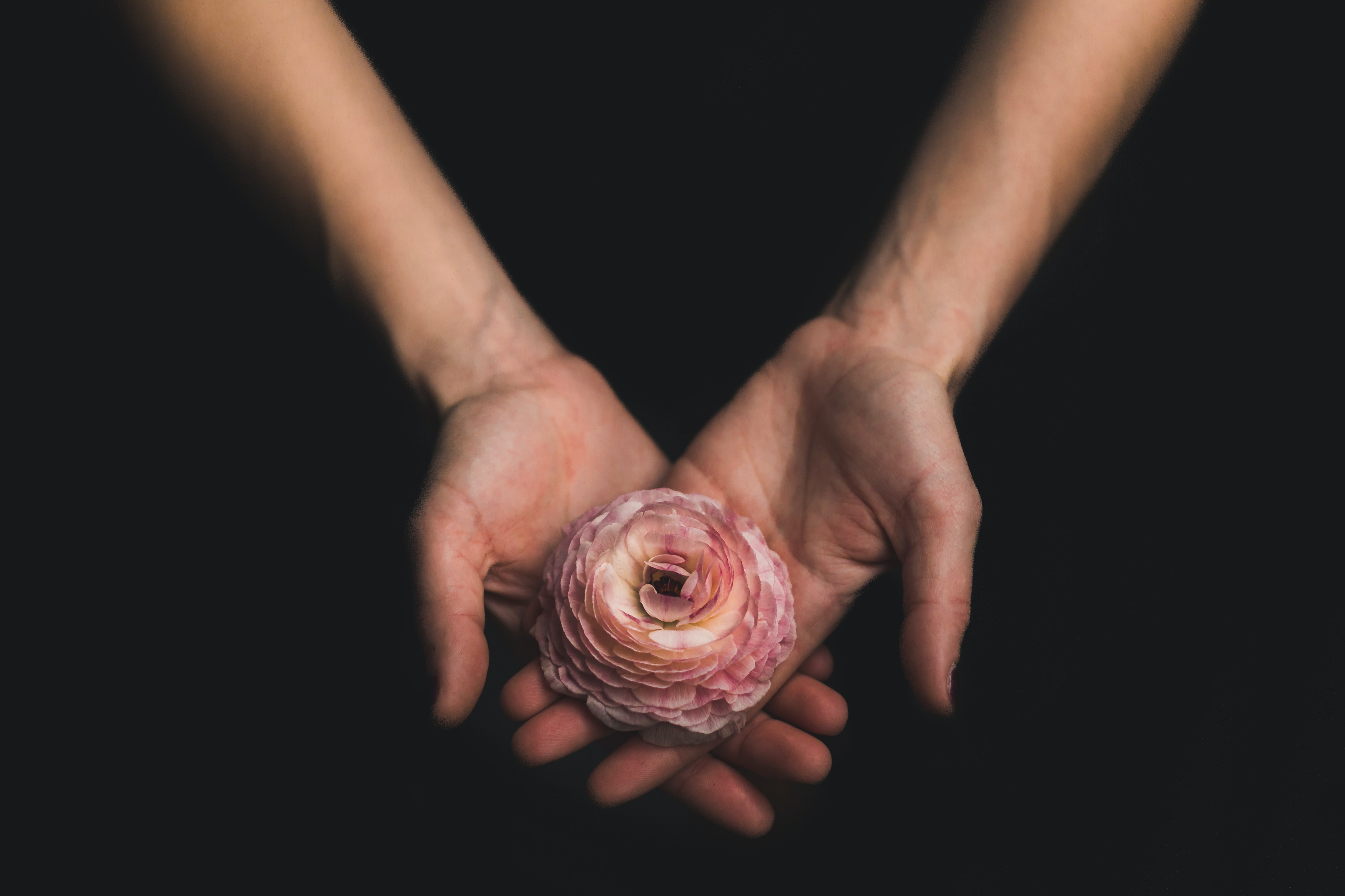 A person's crossed hands holding a pink peony flower