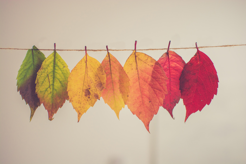 gradation de couleurs de feuilles mortes; du passé au présent au futur notion de temps