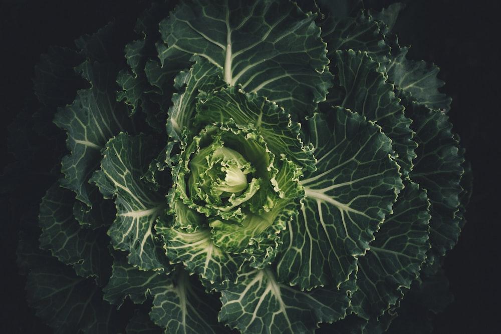 green vegetable