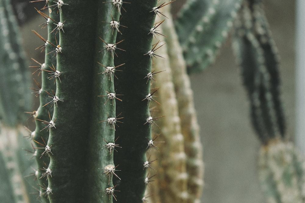 close up photography of green cactus
