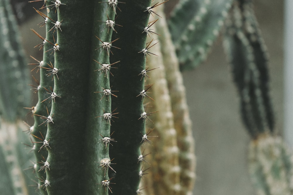 close up photography of green cactus