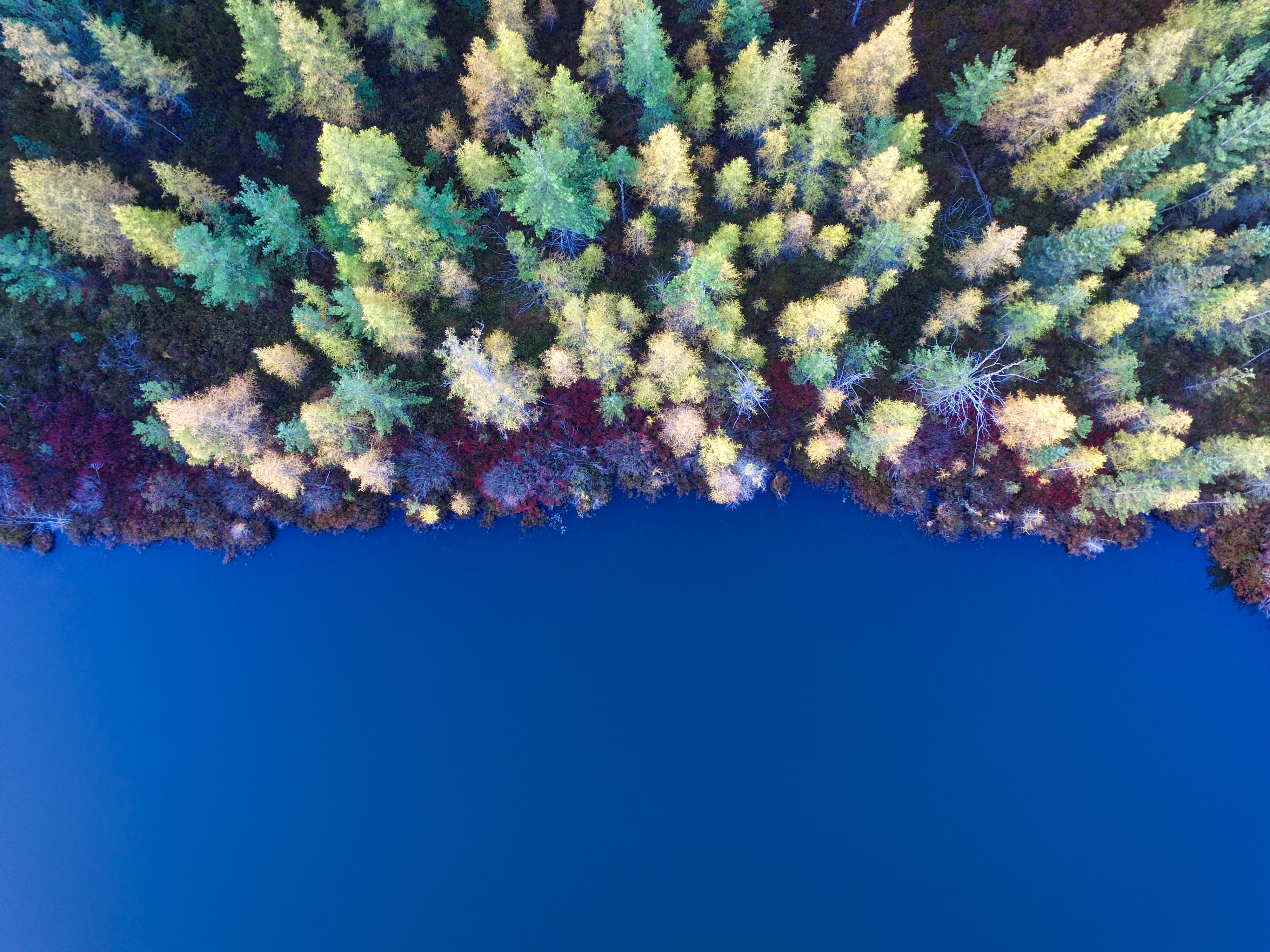 A drone view of a forest and blue lake in Prudenville, Michigan, United States