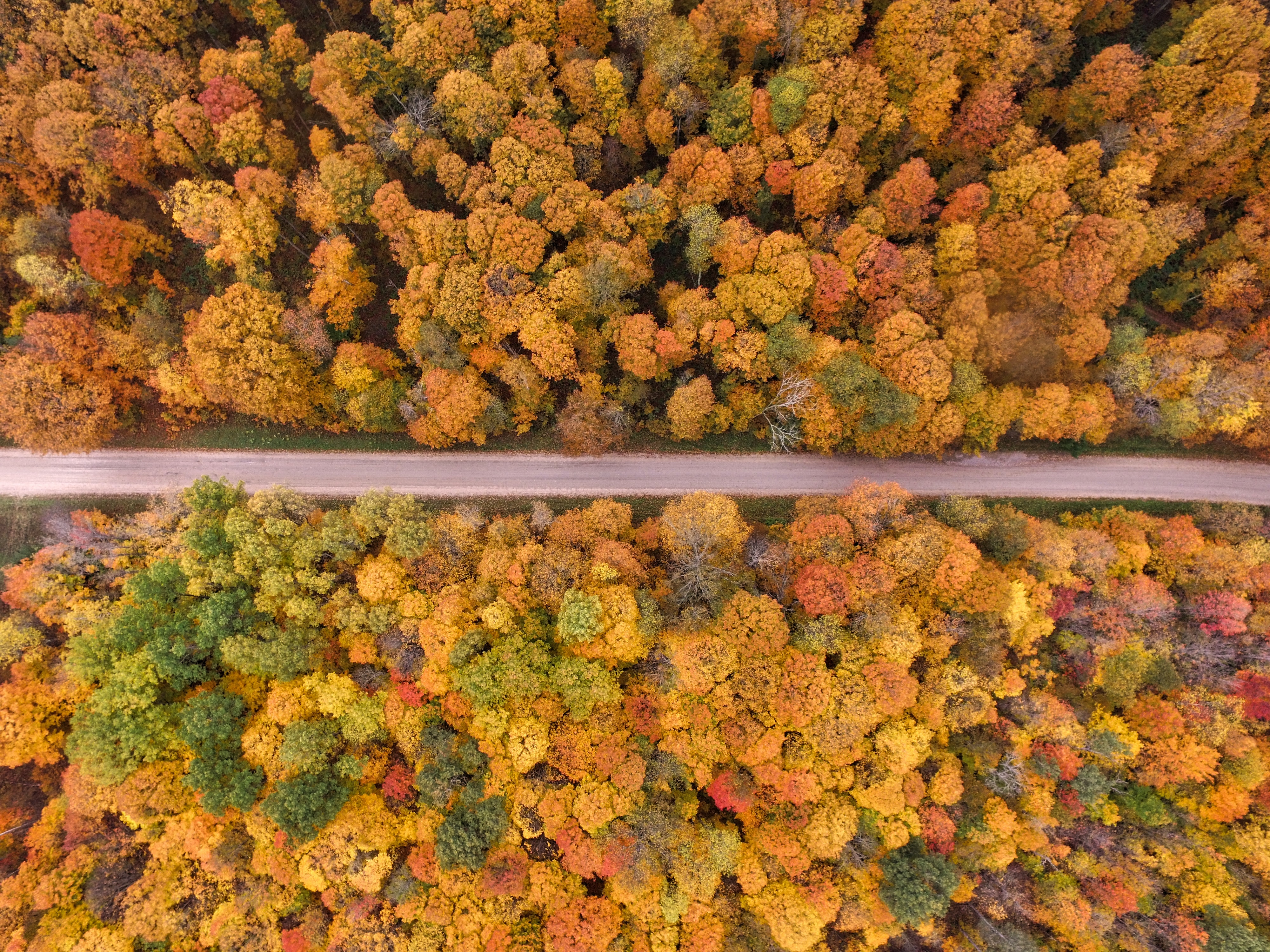 A drone shot of the forest during Autumn with colored leaves in East Jordan, Michigan, United States