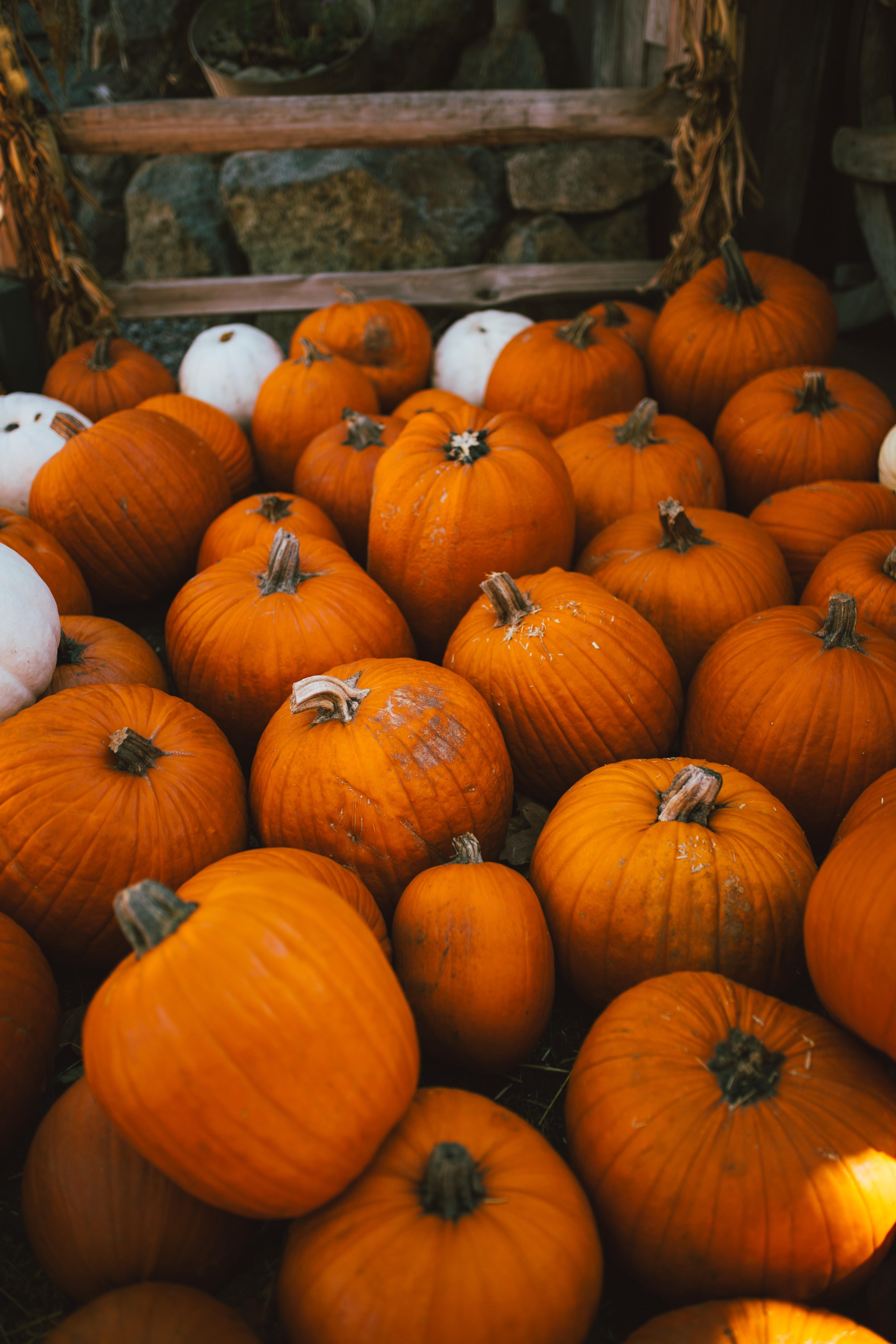 Pile of orange and white pumpkin at an autumnal farm