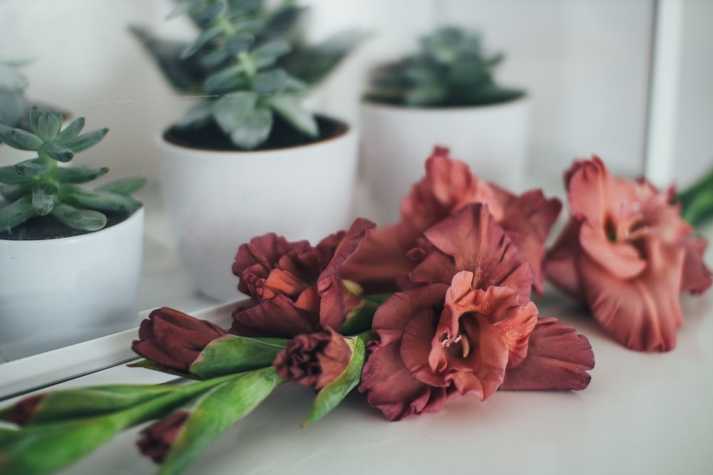 red flowers beside succulents in pots on table