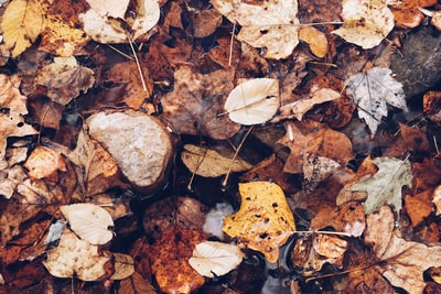 Ground covered in leaves