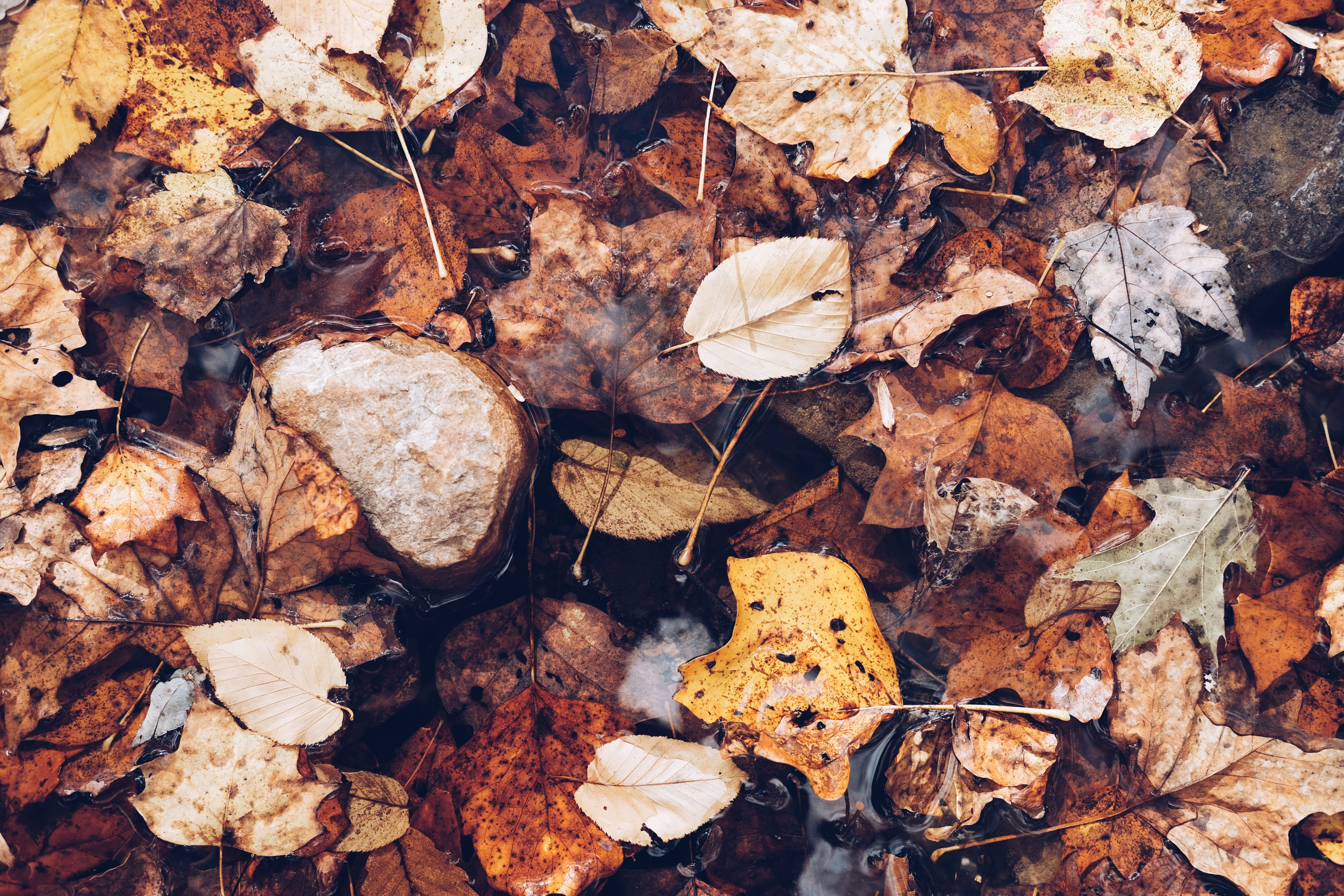 A closeup shot of a pile of leaves on the ground on top of rainwater