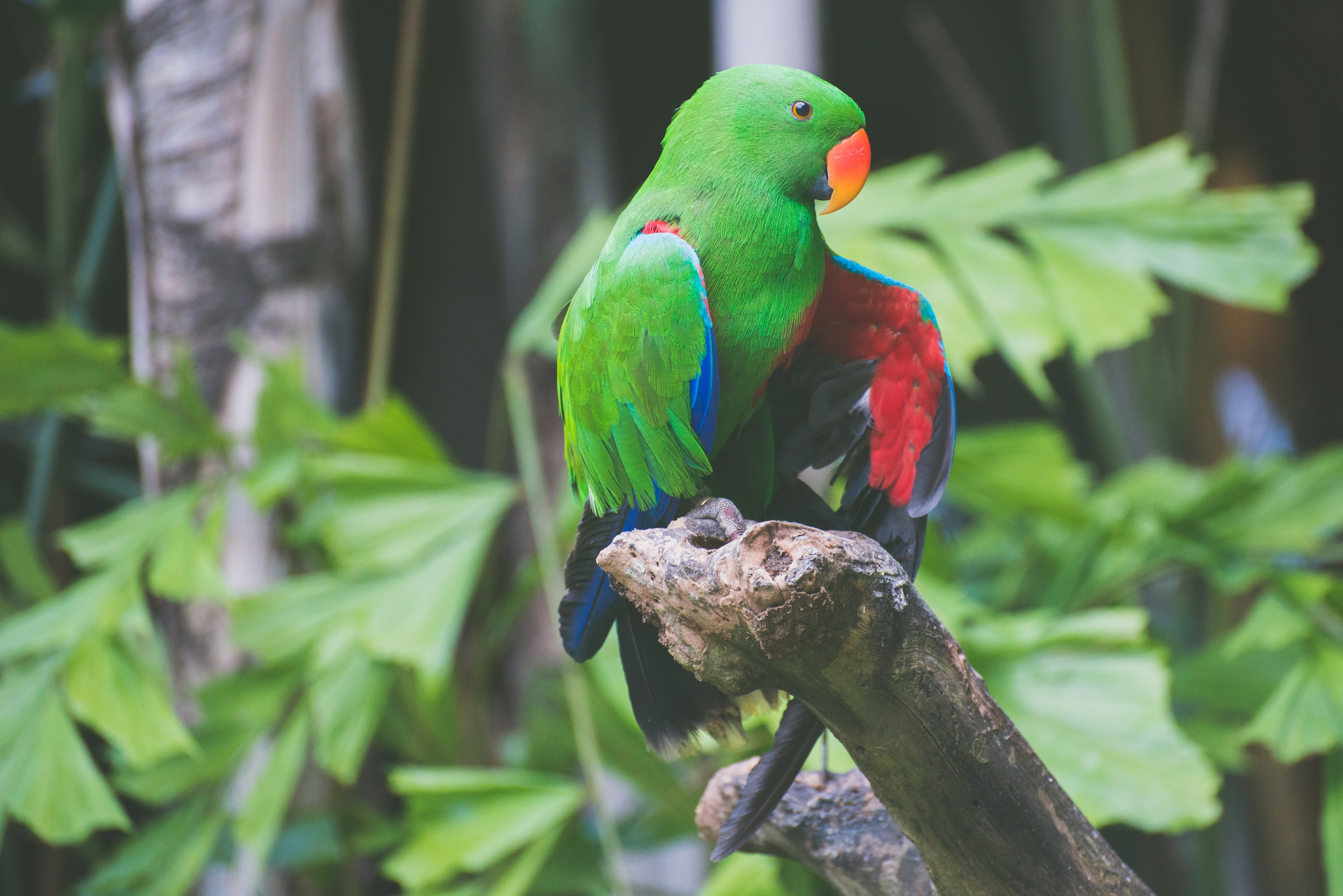Green parrot with an orange beak perched on a branch