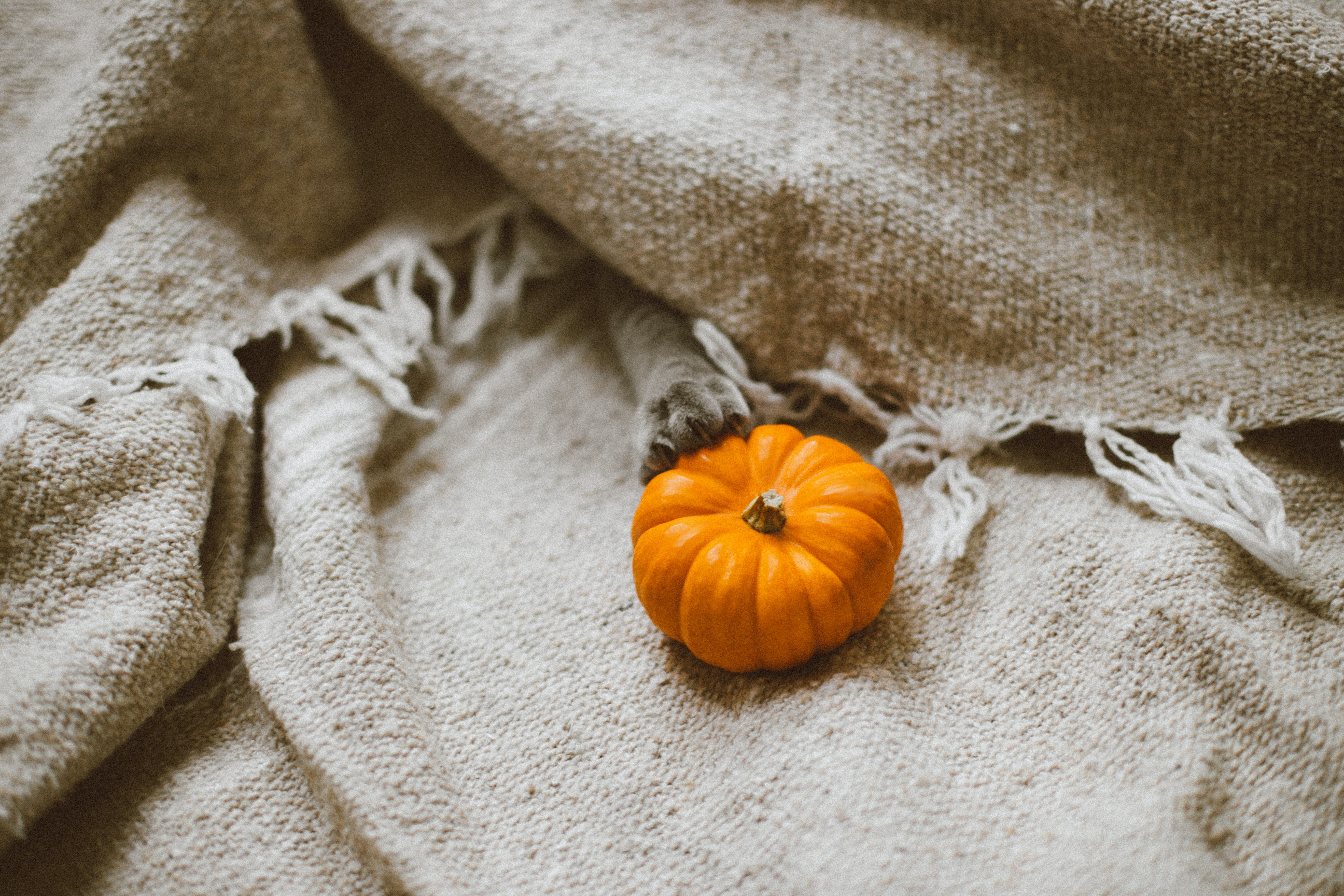 The paw of a cat and a tiny pumpkin with thick linen fabric in London
