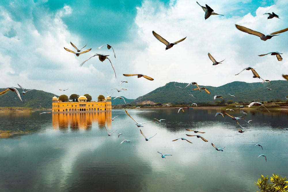 birds flying over the lake during daytime