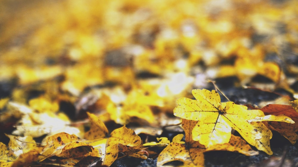 shallow focus photo of leaves