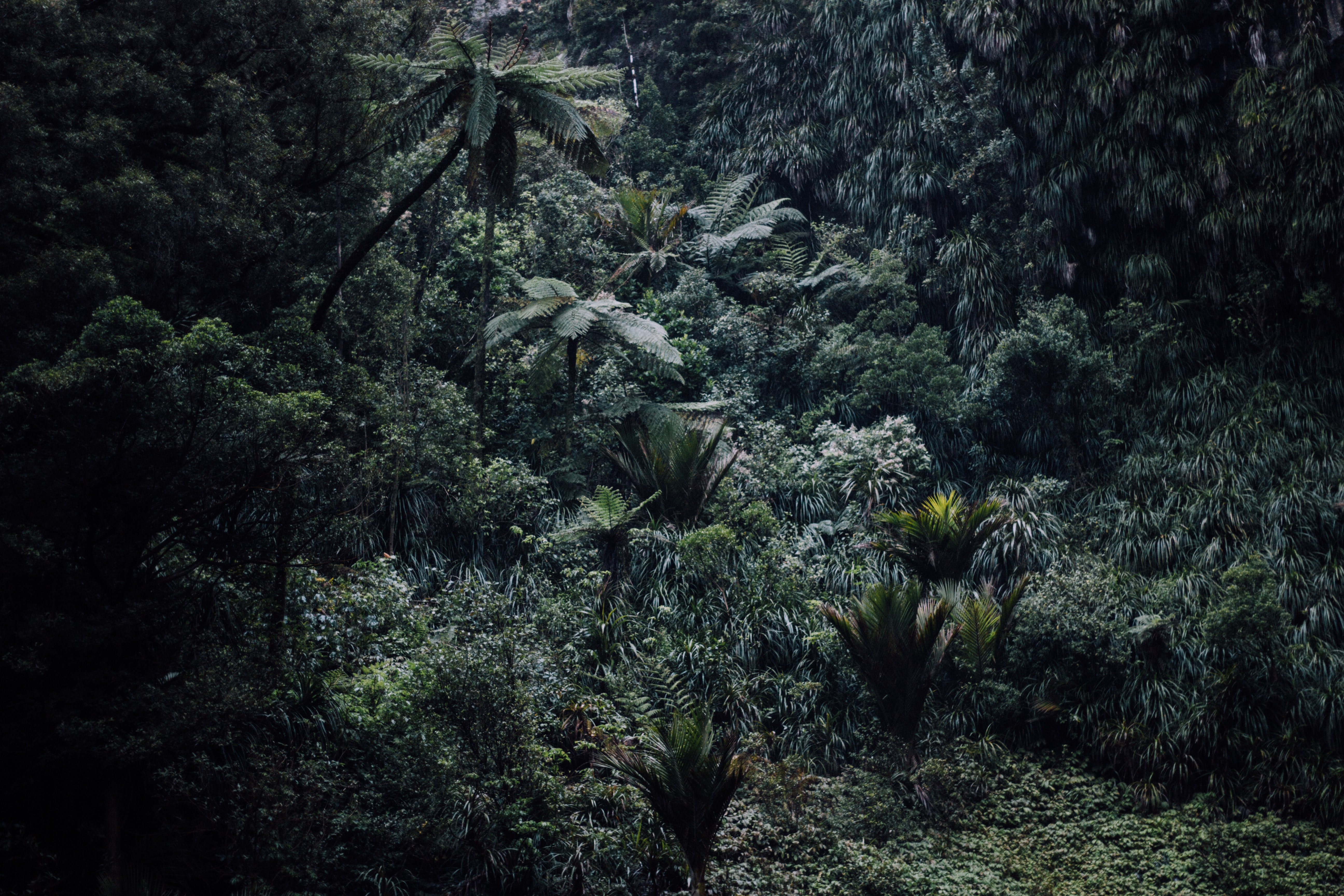 A high-angle shot of a humid forest near Bridal Veil Falls