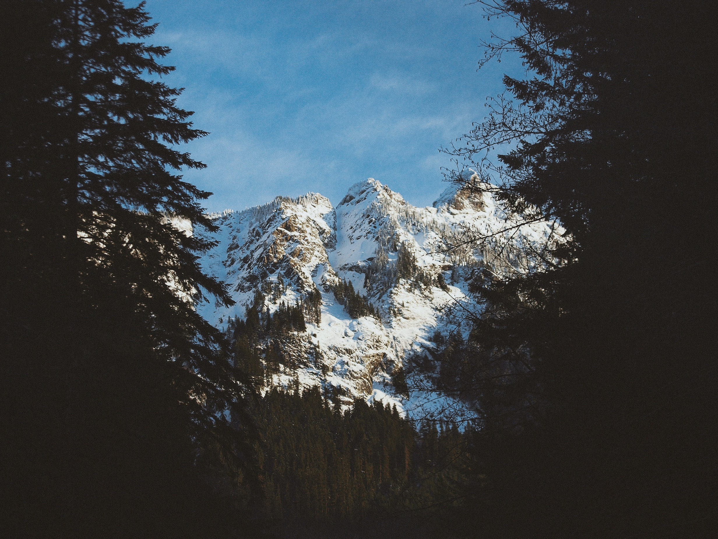 A steep snow-covered slope partially obscured by tall conifers in the Mount Baker National Forest