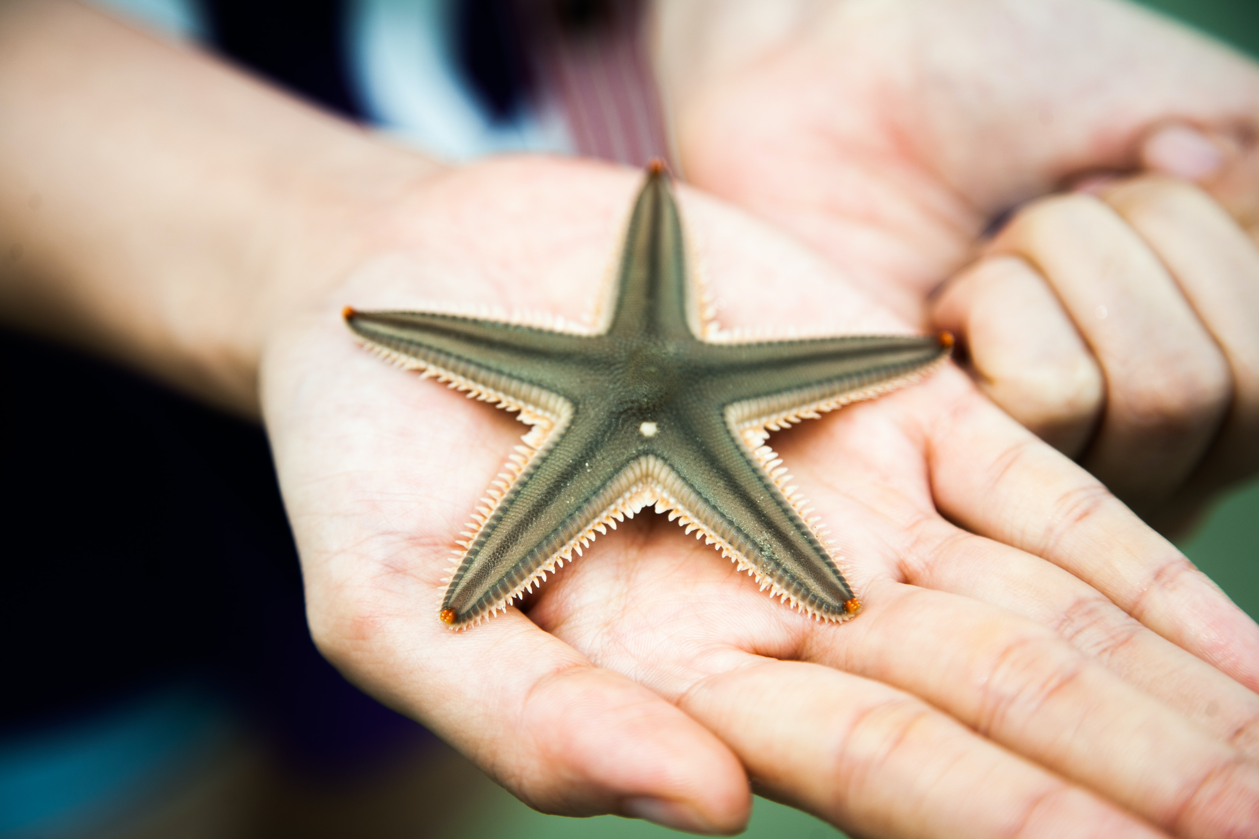 A starfish on a person's hand