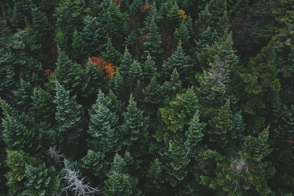 aerial view of green leafed trees
