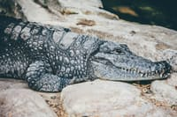 *accepts the chaos of everything* poems stories