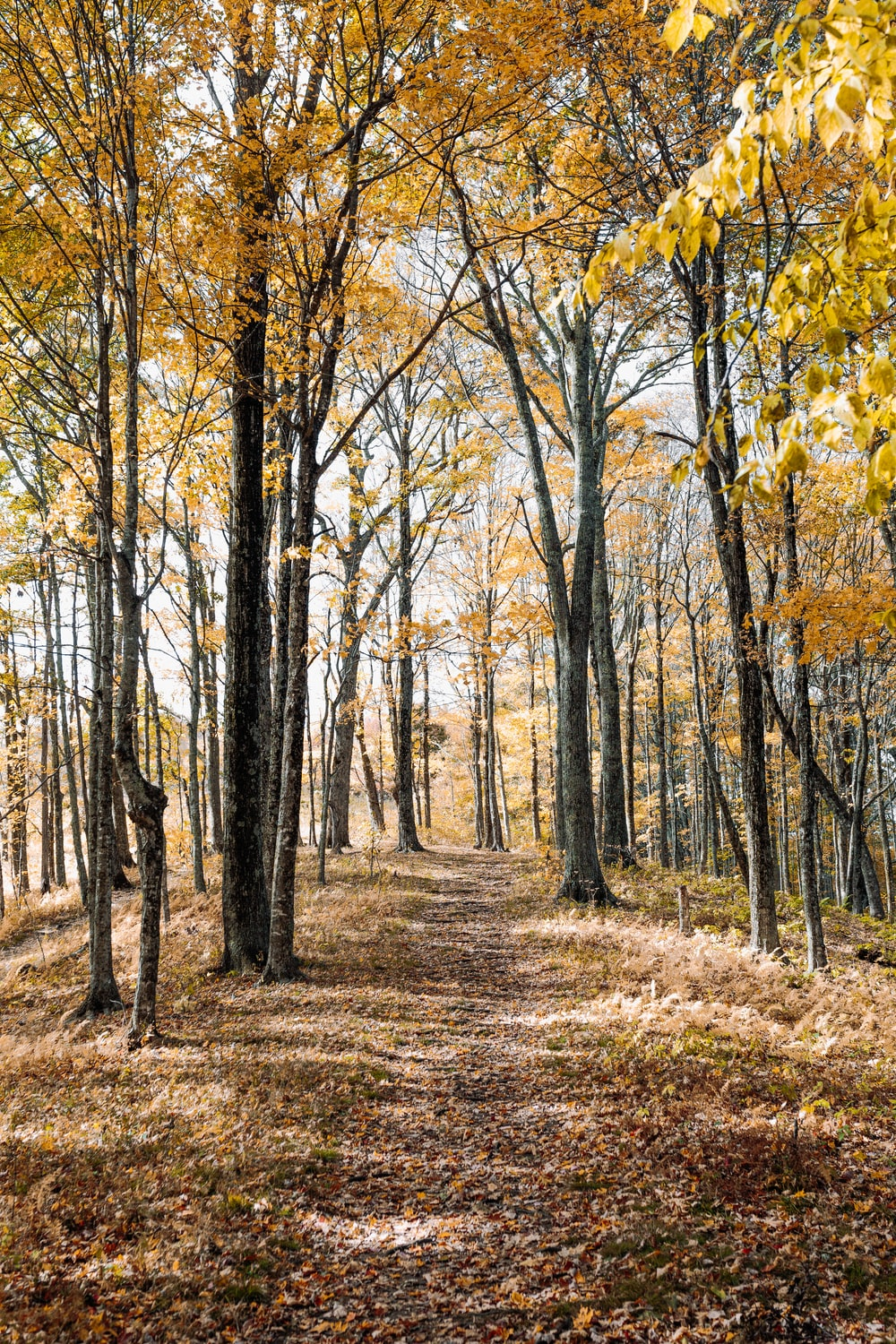 brown forest